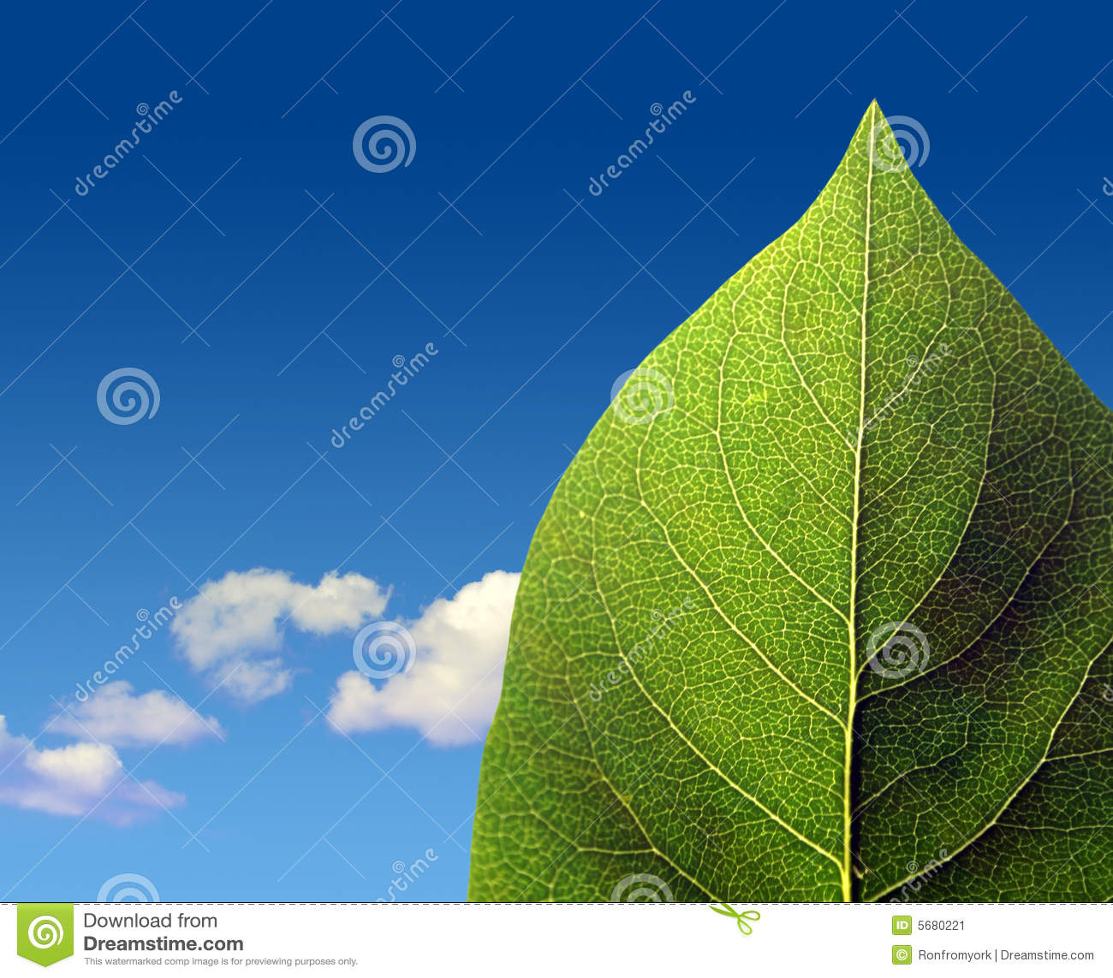 多云绿色叶子天空