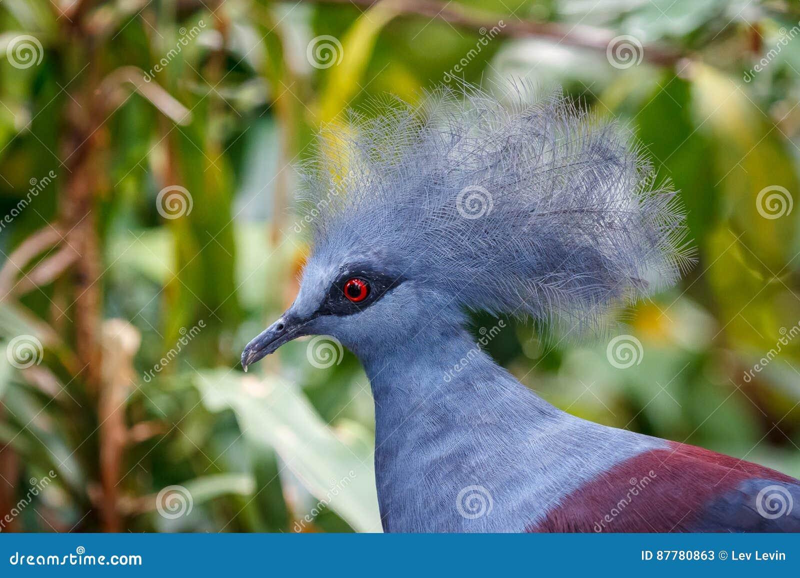 维多利亚在圣淘沙海岛上的公园加冠了鸽子