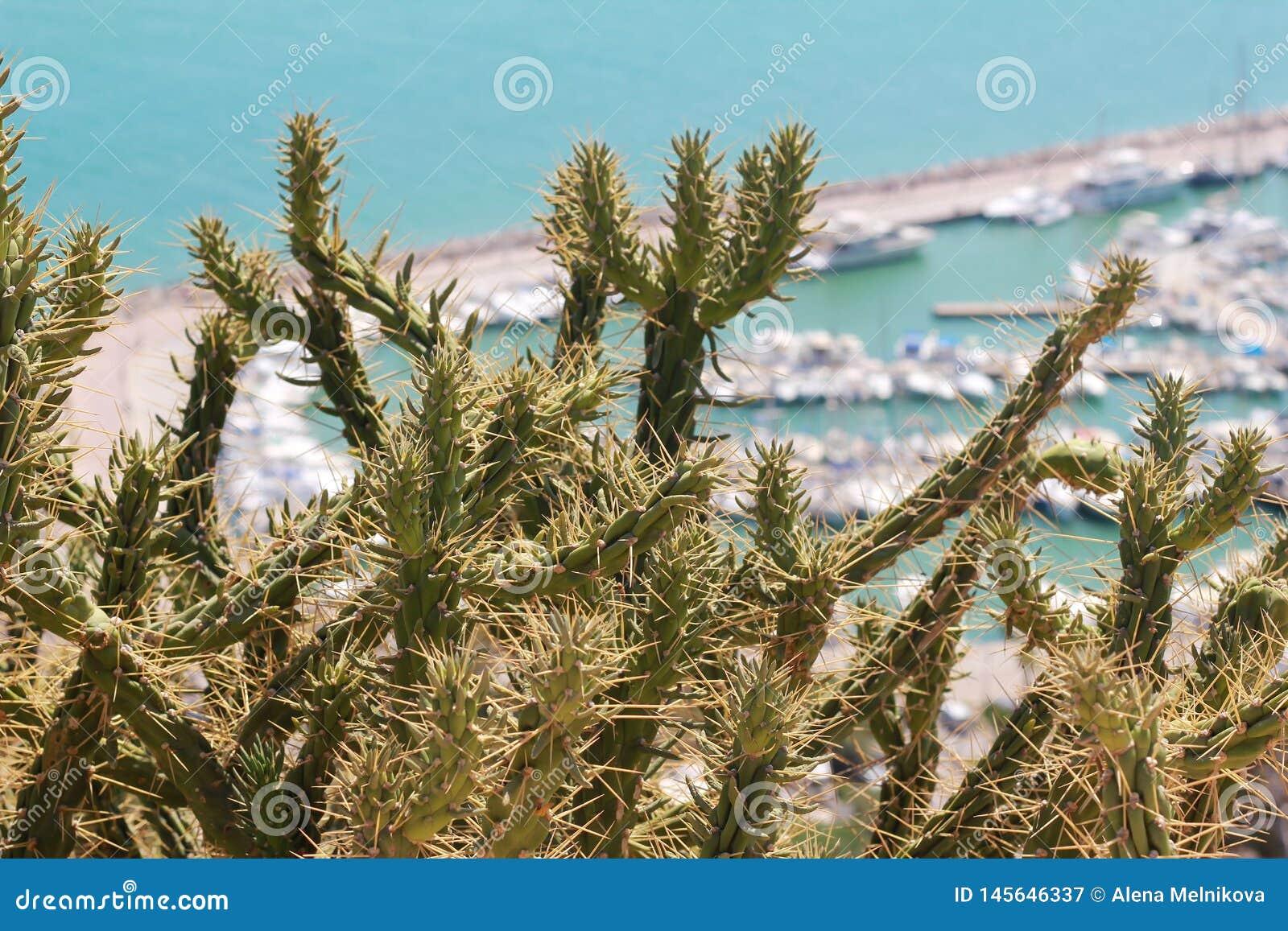 多刺的仙人掌在海岸增长