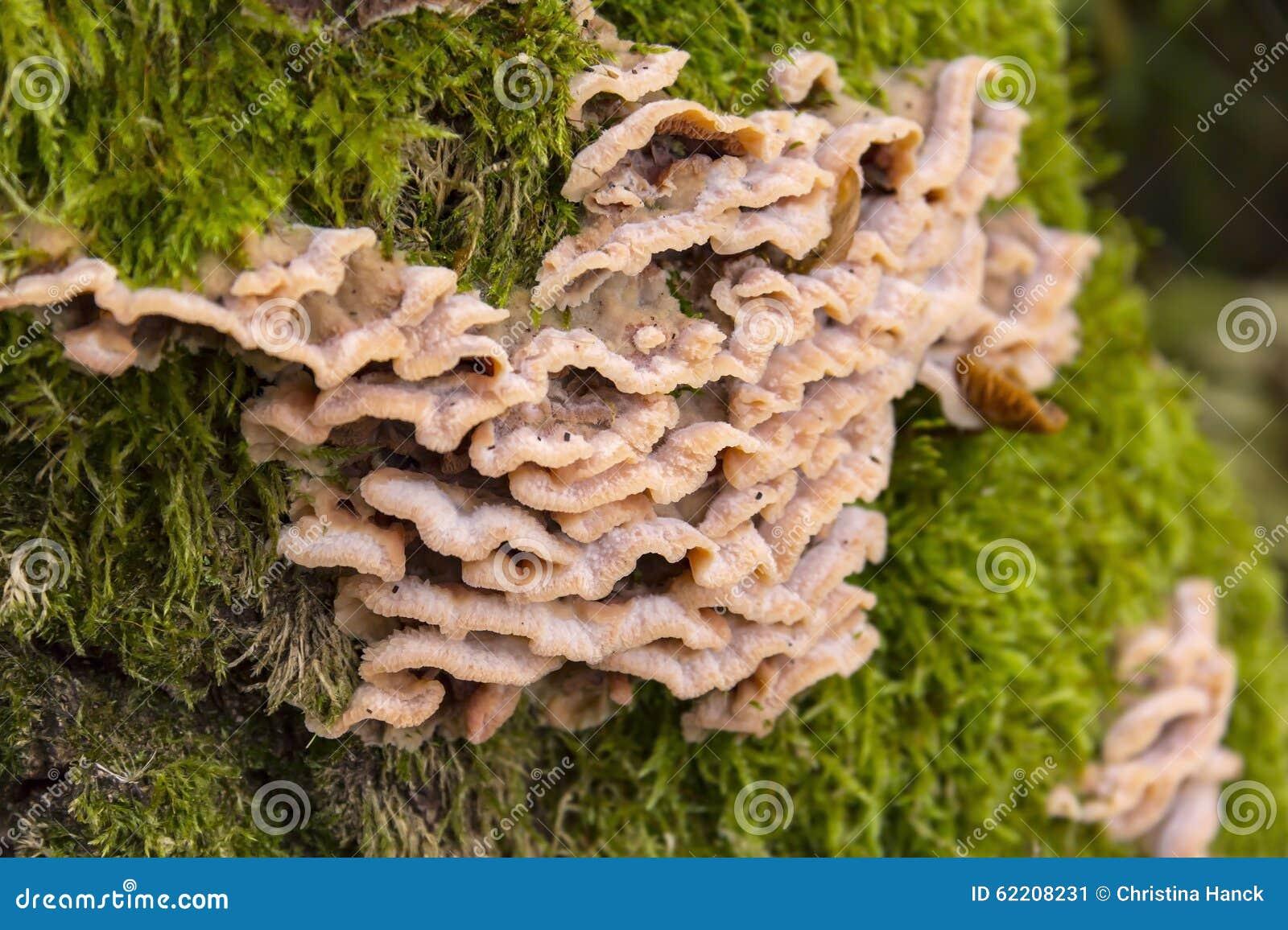 多孔菌库存图片. 图片包括有黄色...