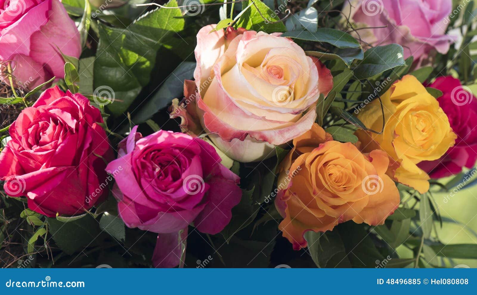 多彩多姿的玫瑰