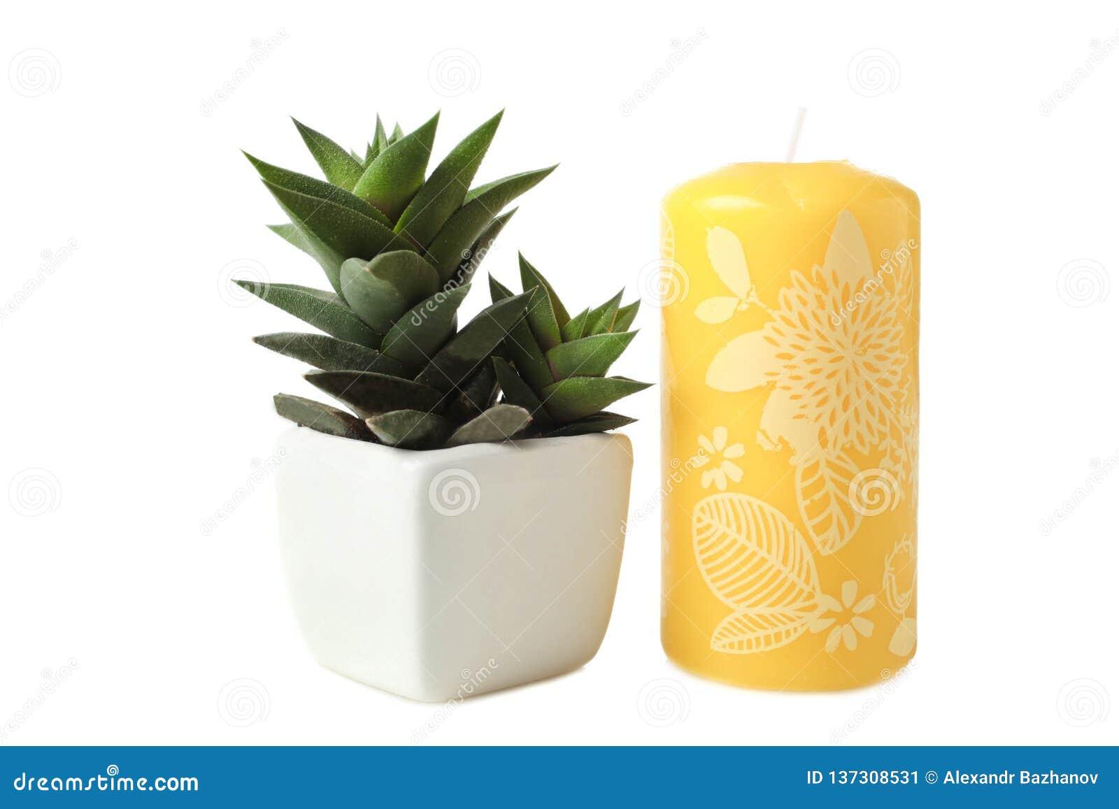多汁植物在白色花盆和蜡烛