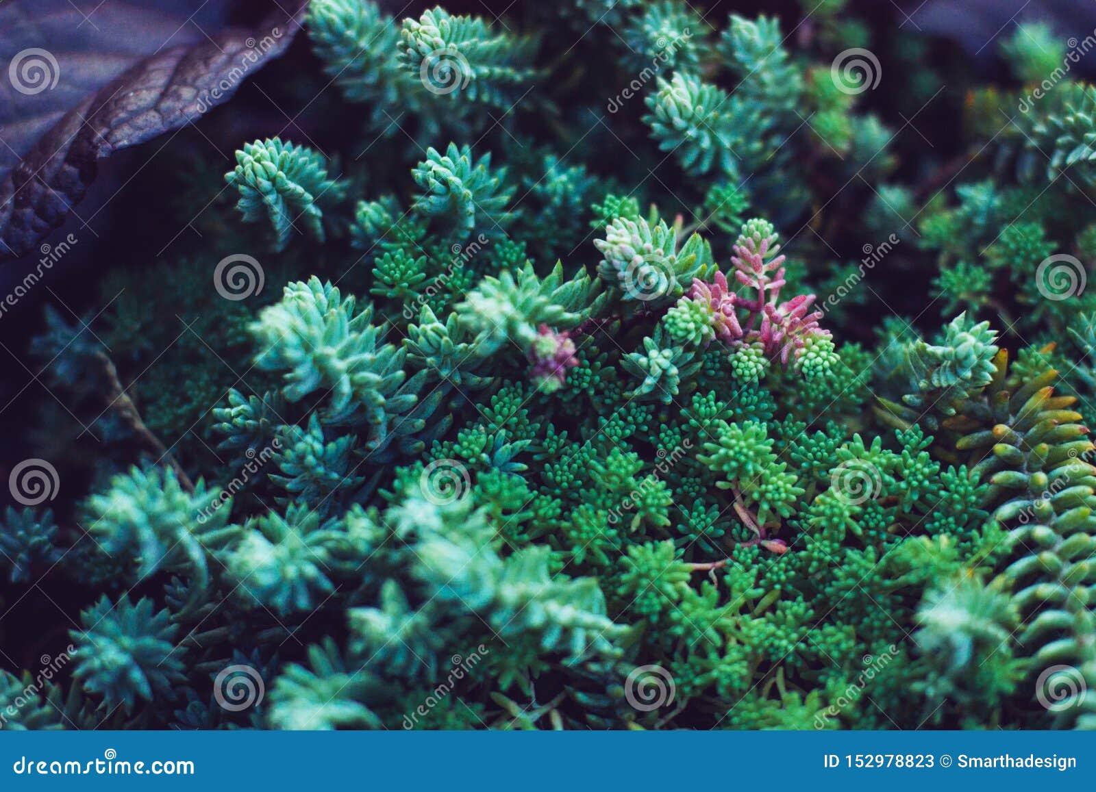 多汁植物绿色植物 关闭混杂的微型仙人掌 最低纲领派花卉为floristry商店