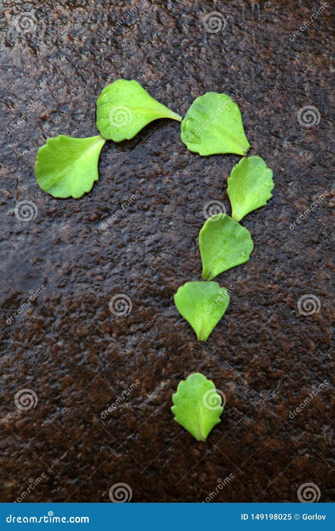 多汁植物问号石头背景没人