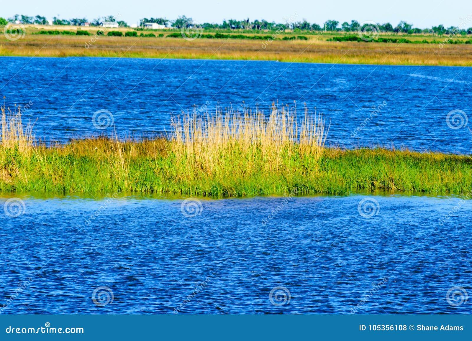 多沼泽的支流路易斯安那