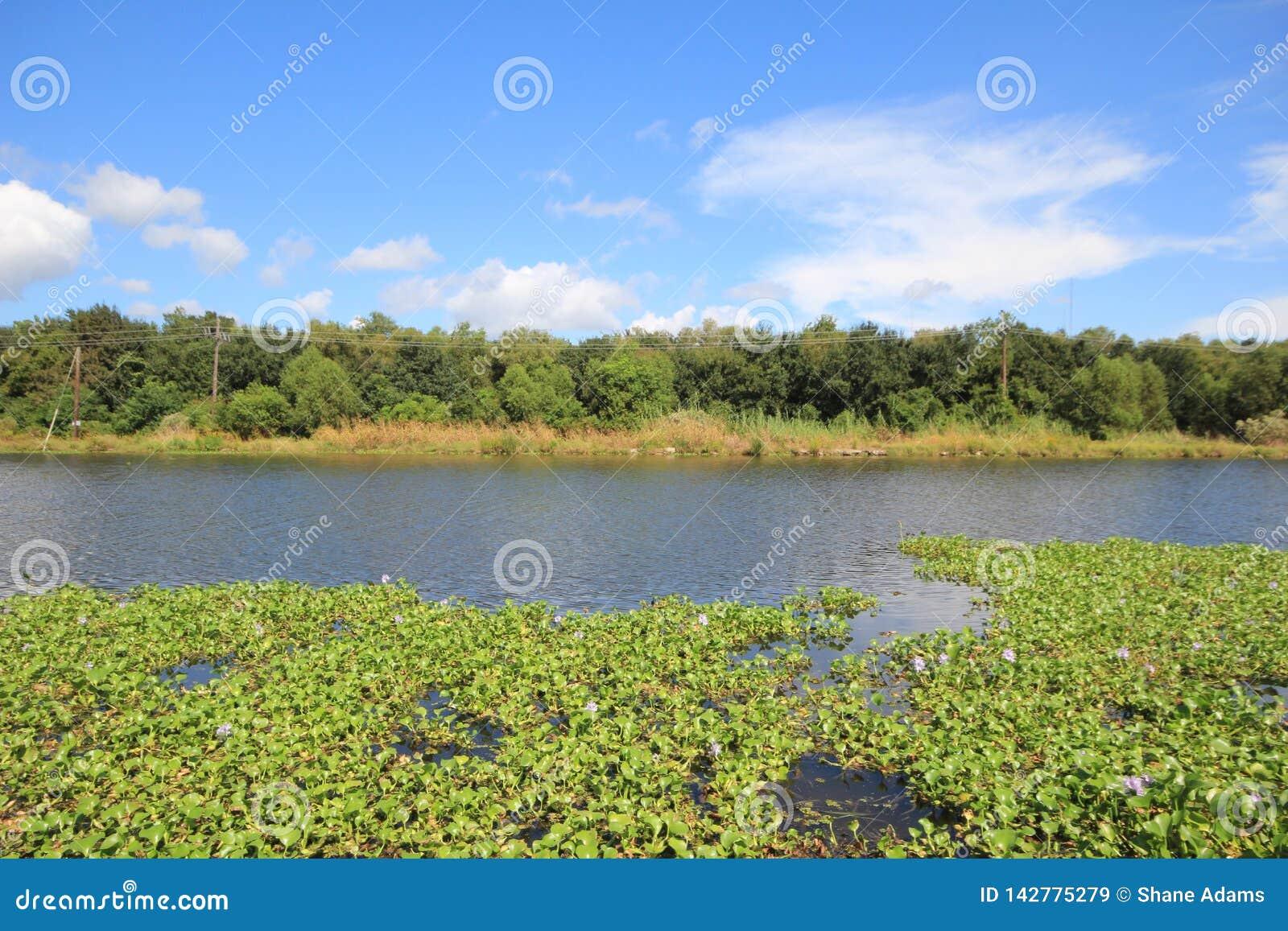 多沼泽的支流Lafourche,路易斯安那