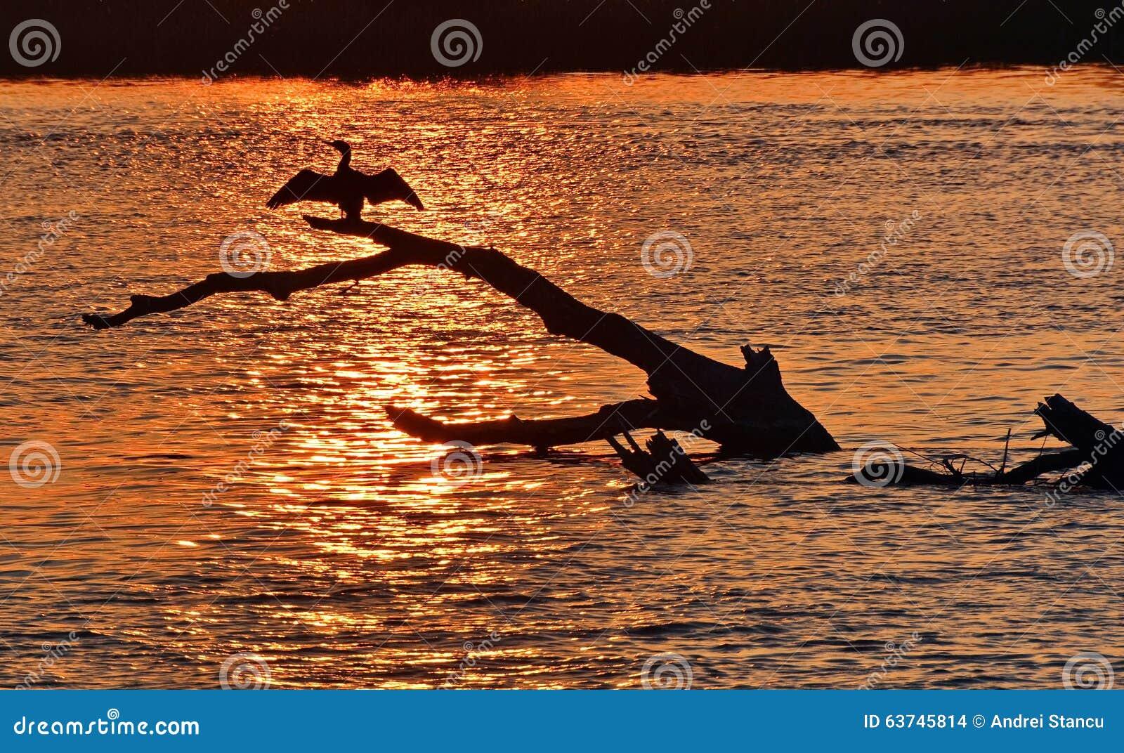 多瑙河三角洲日落
