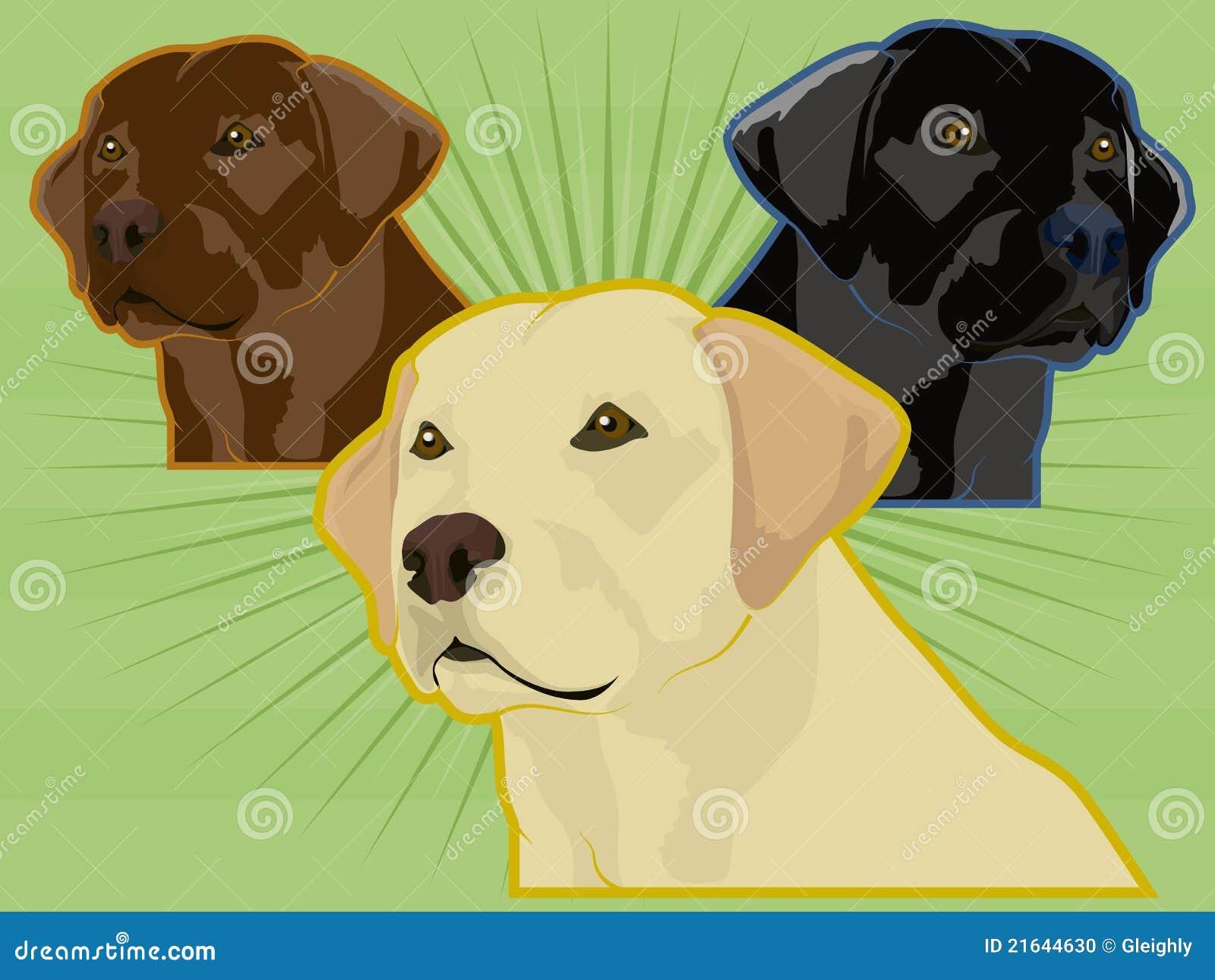 多种拉布拉多猎犬
