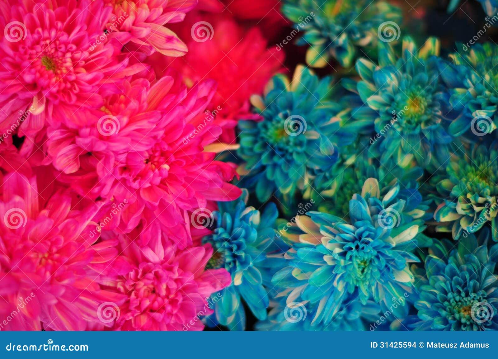 多色花#2