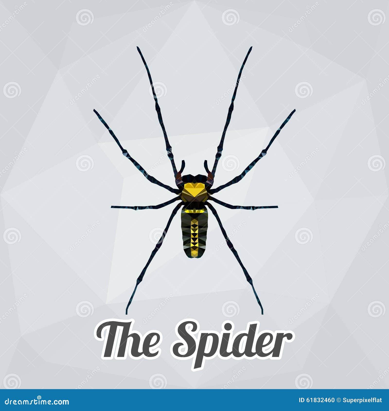 多角形传染媒介充分的身体蜘蛛