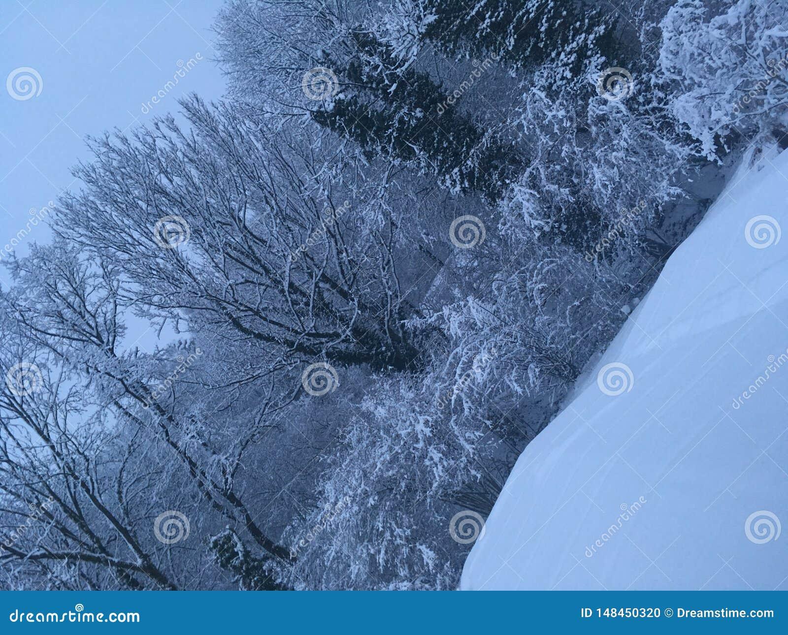 多雪的森林