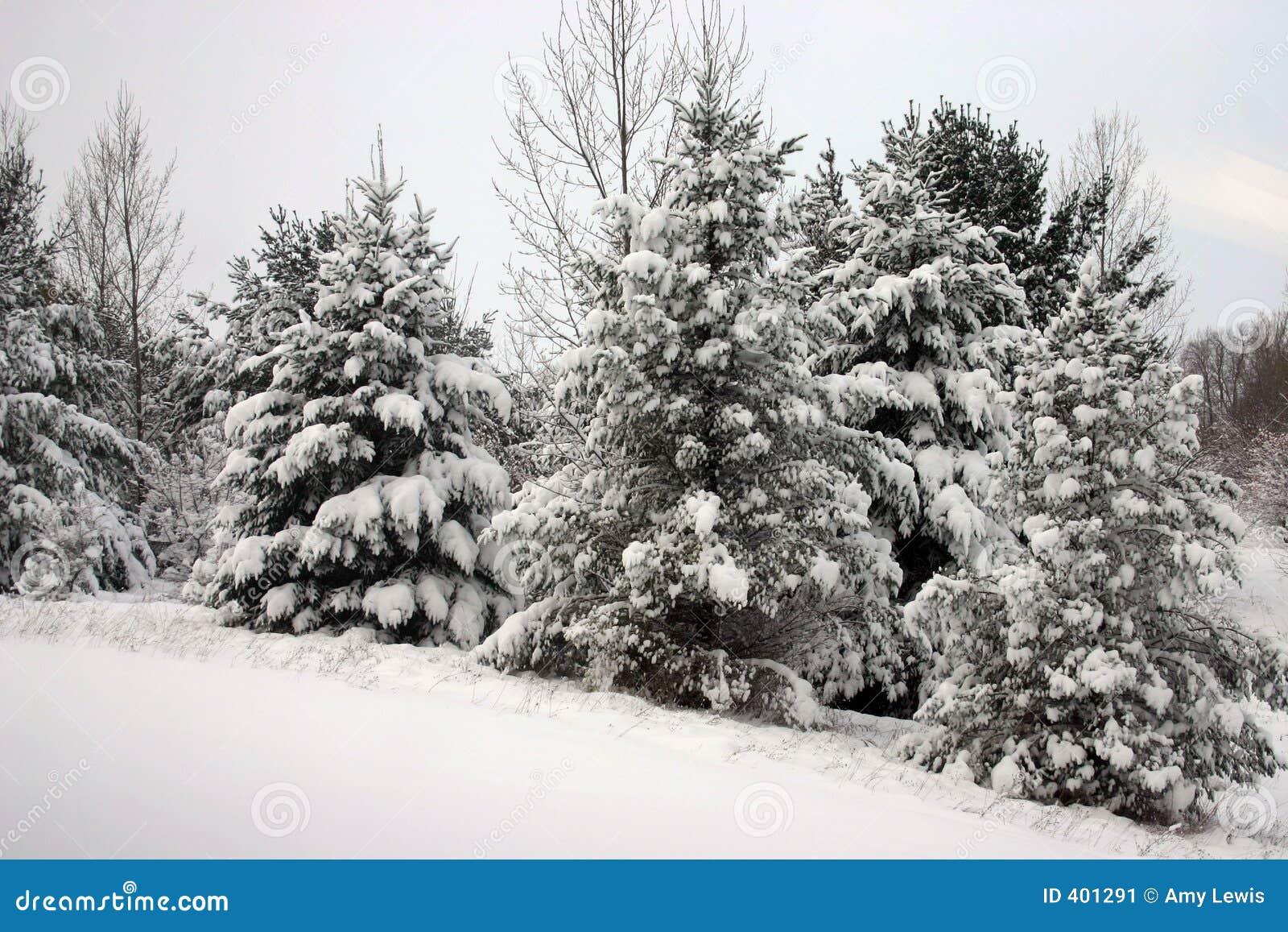 多雪的结构树