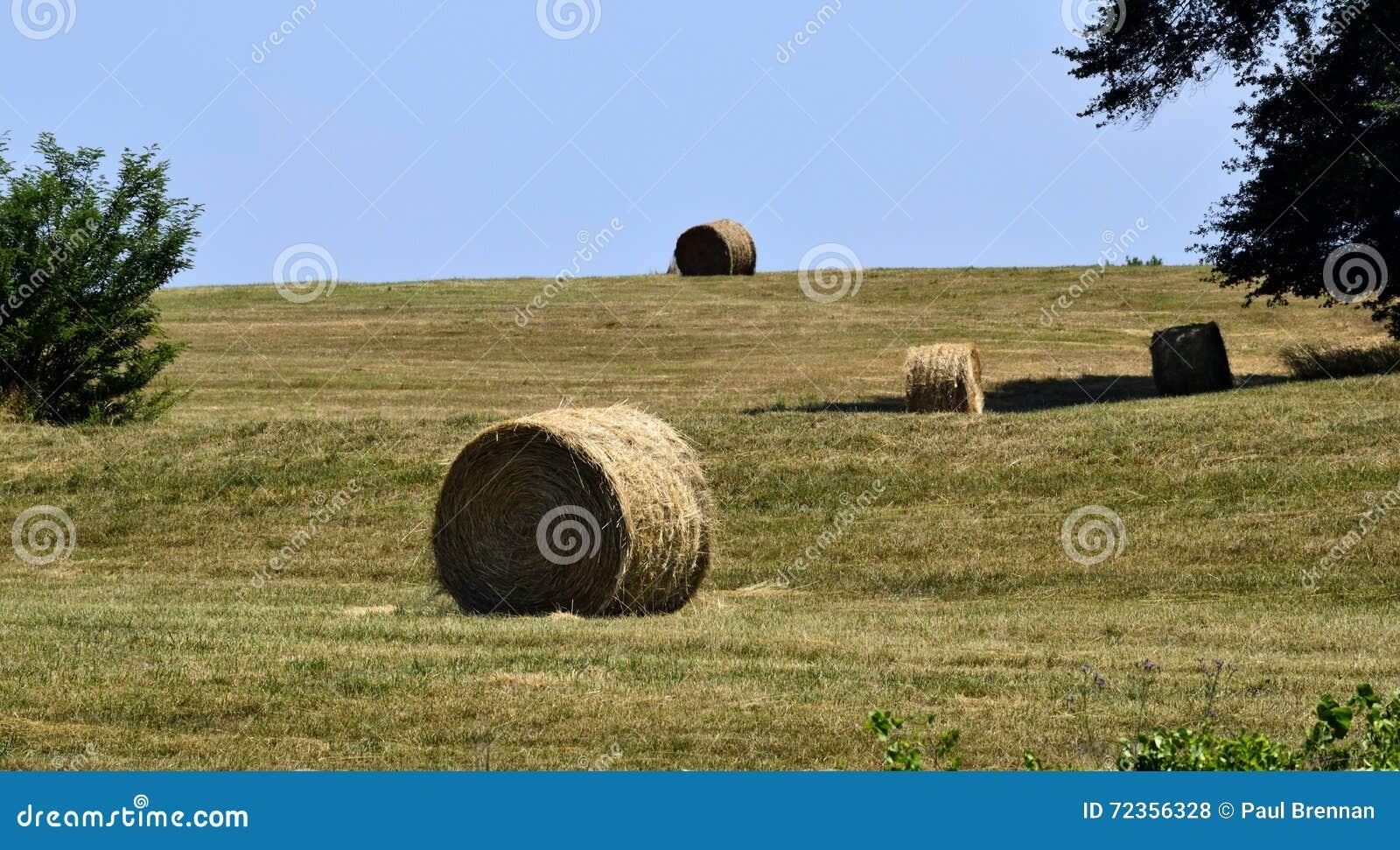 大包在领域,乔治亚,美国的干草