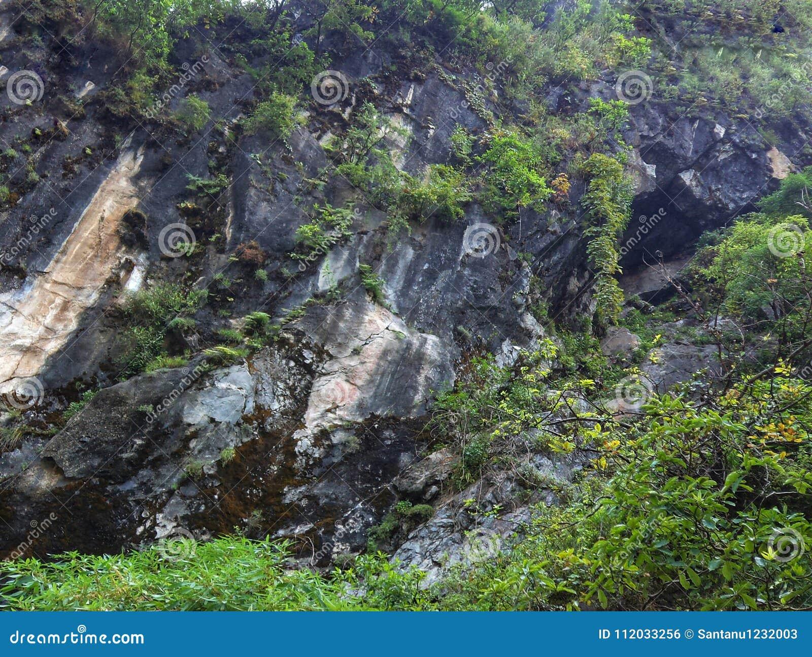 大吉岭岩石山的绿色