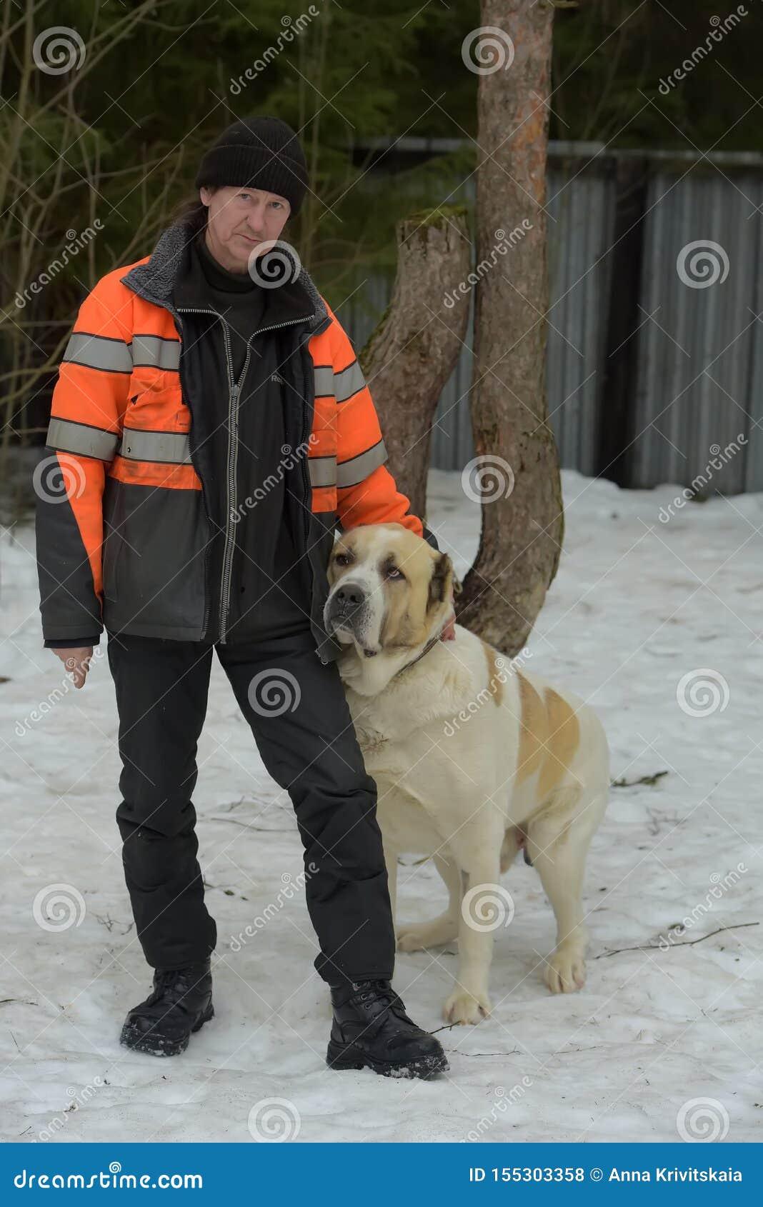 大品种流浪狗的避难所  有alabai的避难所雇员