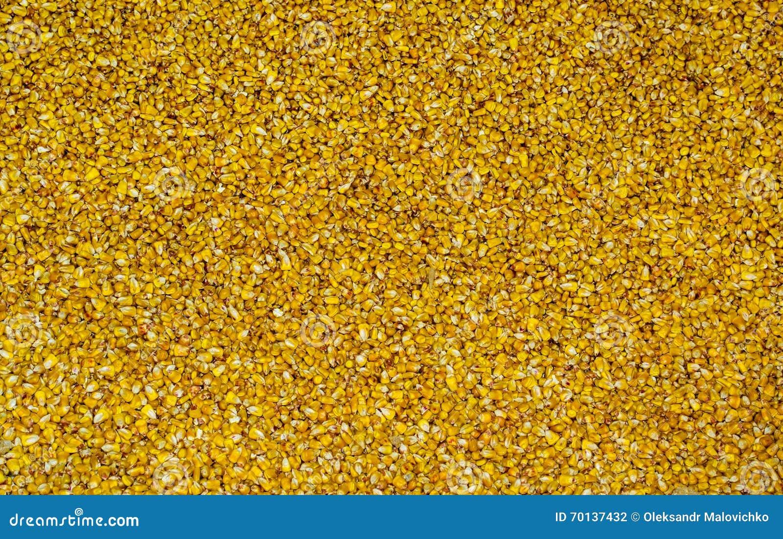 大块黄色玉米五谷纹理
