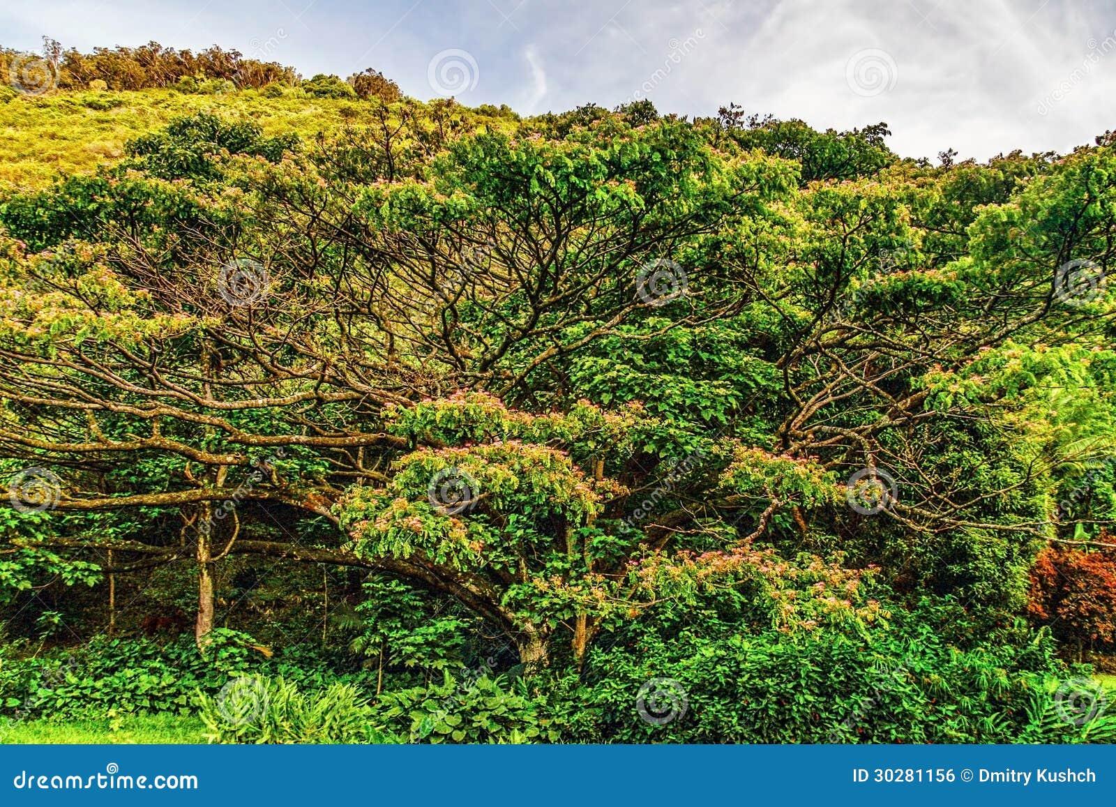 大树在森林里