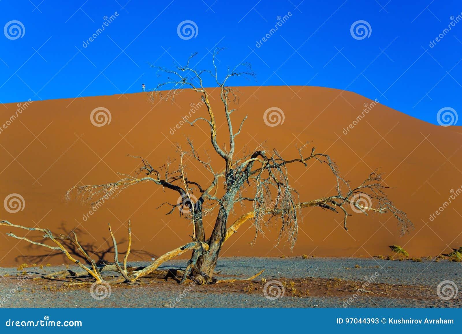 大沙丘和小树