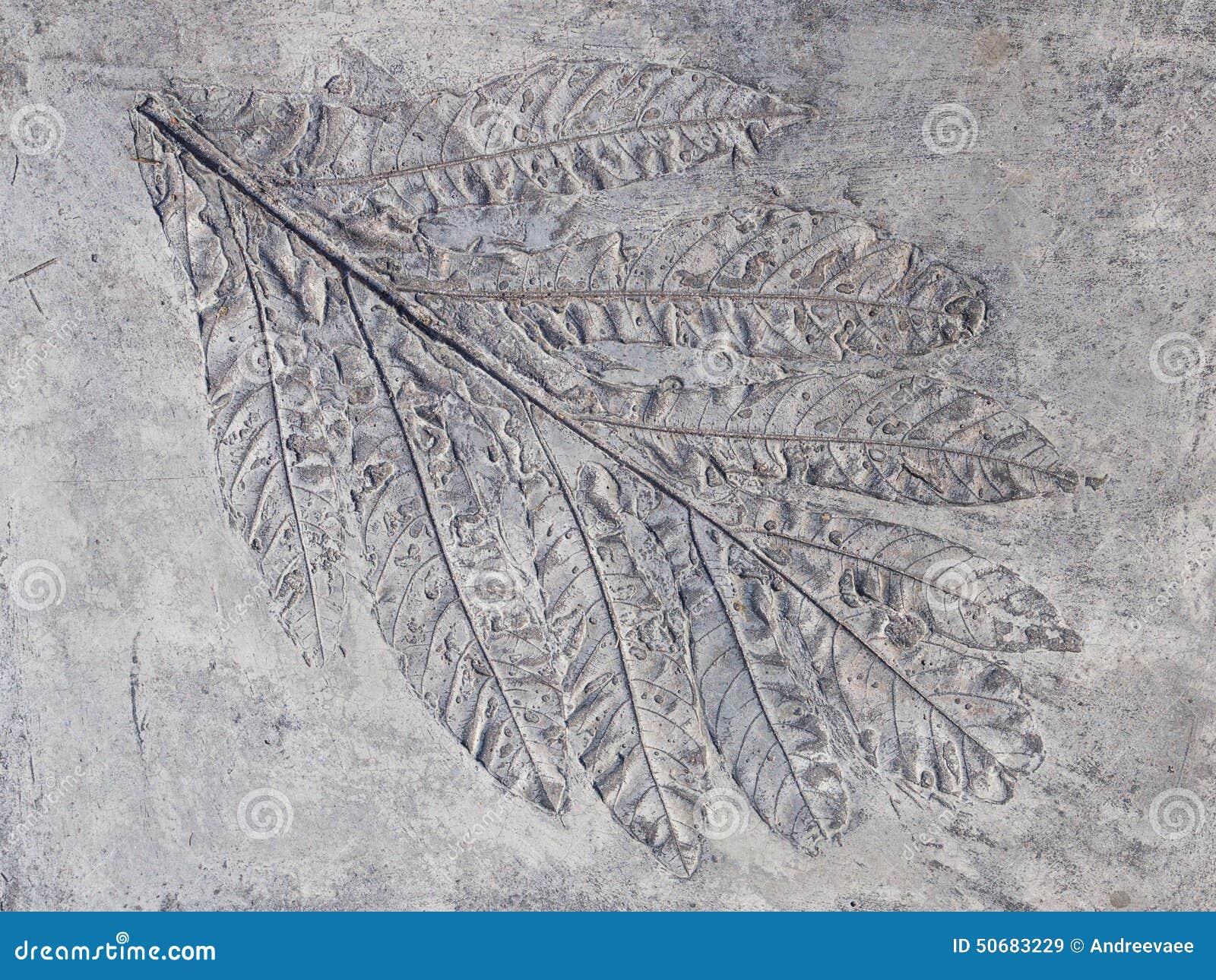Download 大灰色印刷品植物叶子 库存图片. 图片 包括有 古生物学, 历史记录, 凸面, 古生代, 干燥, 黏土, 作用 - 50683229