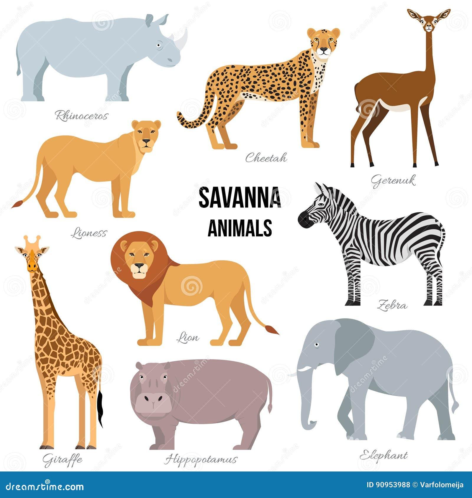 大草原大象,犀牛,长颈鹿,猎豹,斑马,狮子,河马非洲动物  也corel凹道例证向量