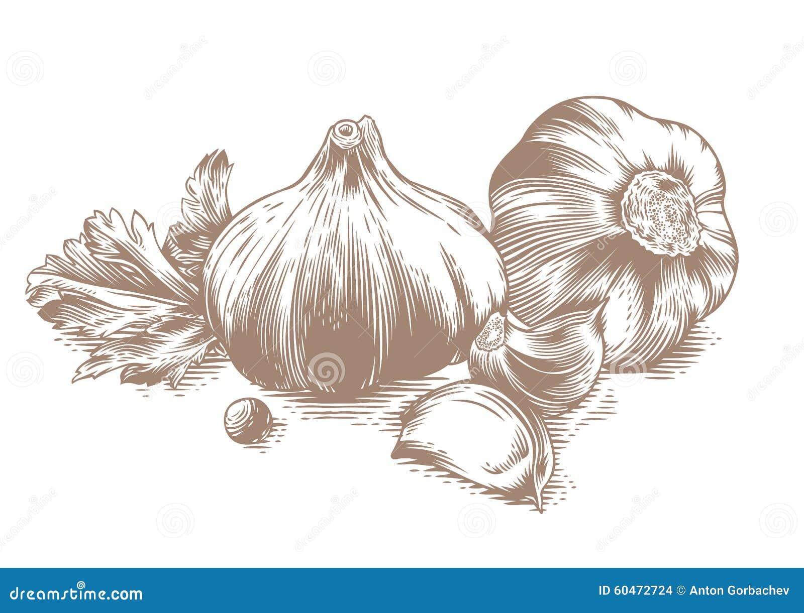 两大蒜头图画用两瓣大蒜.图片