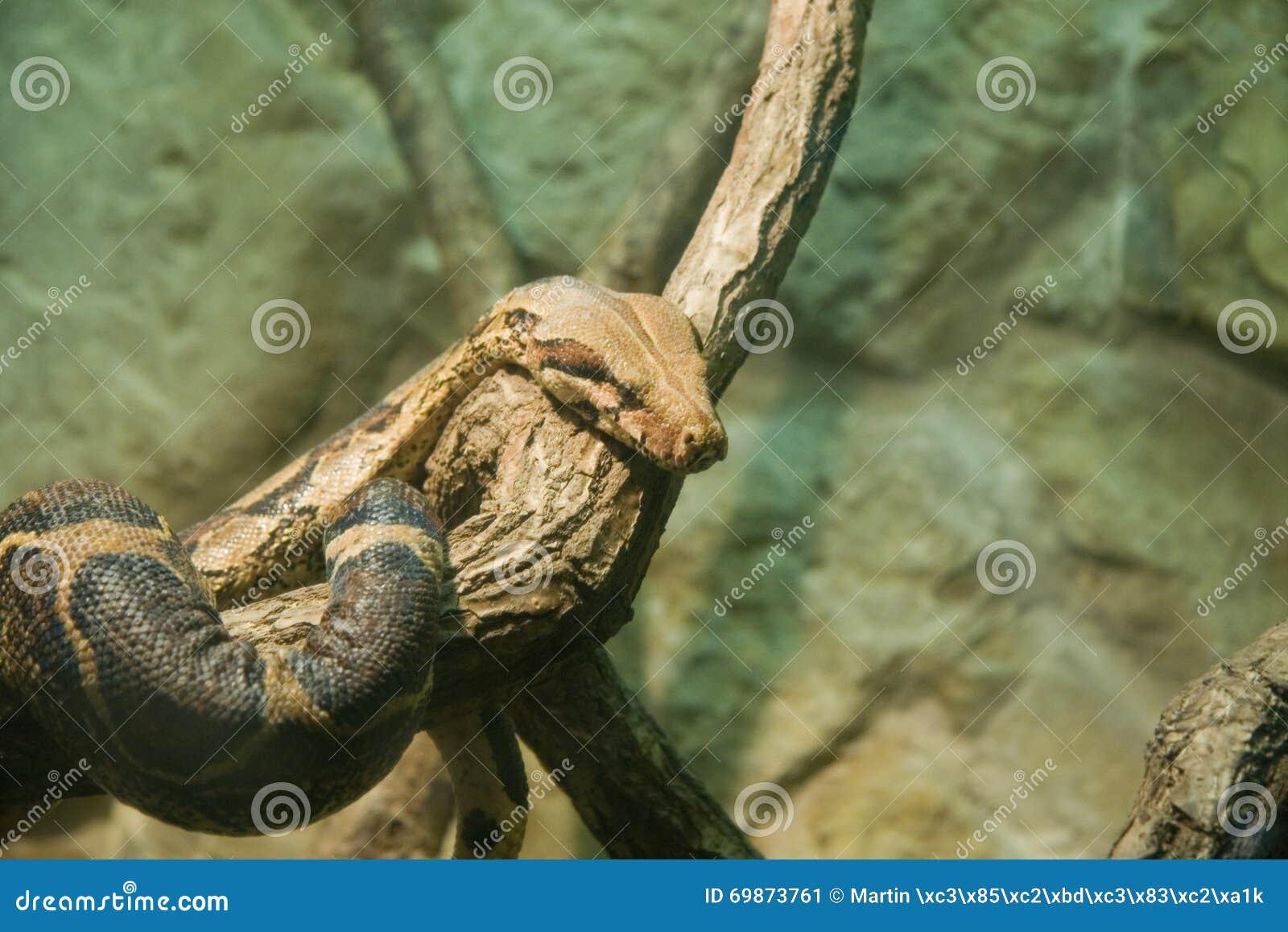 梦见大蟒蛇挡住去路