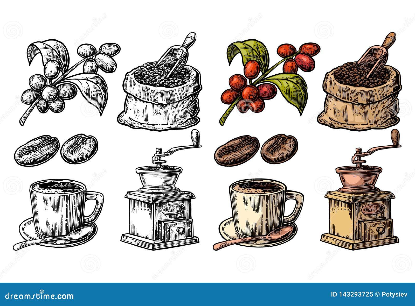 大袋用与木瓢的咖啡豆和豆、杯子、分支与叶子和莓果