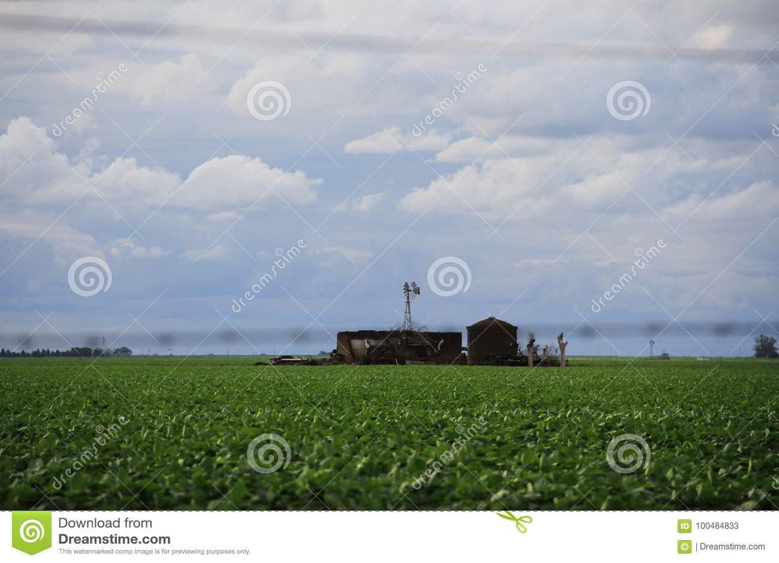 大豆种植园