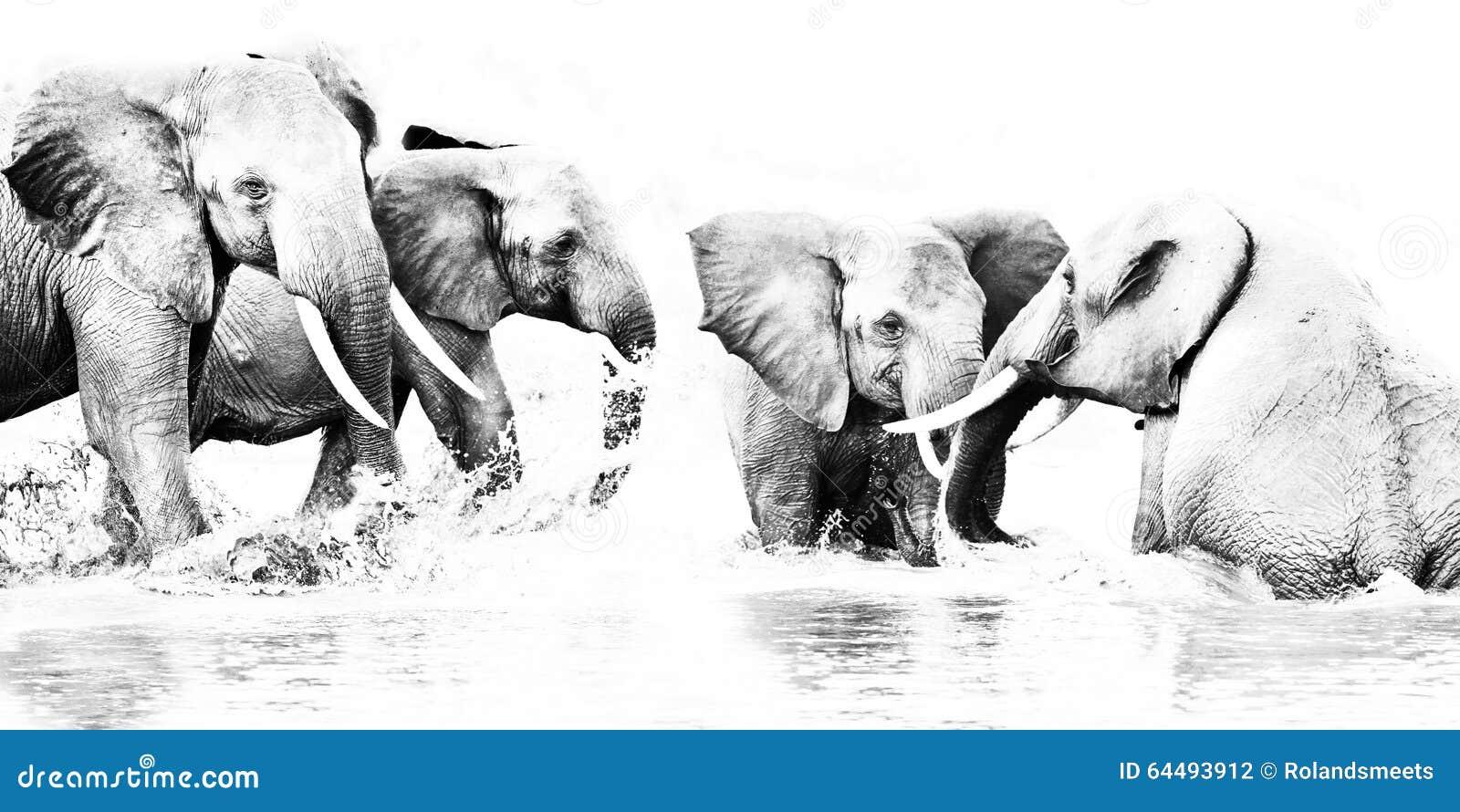 黑白艺术摄影, a大象牧群充当一个深水水池在tsavo东部肯尼亚.图片