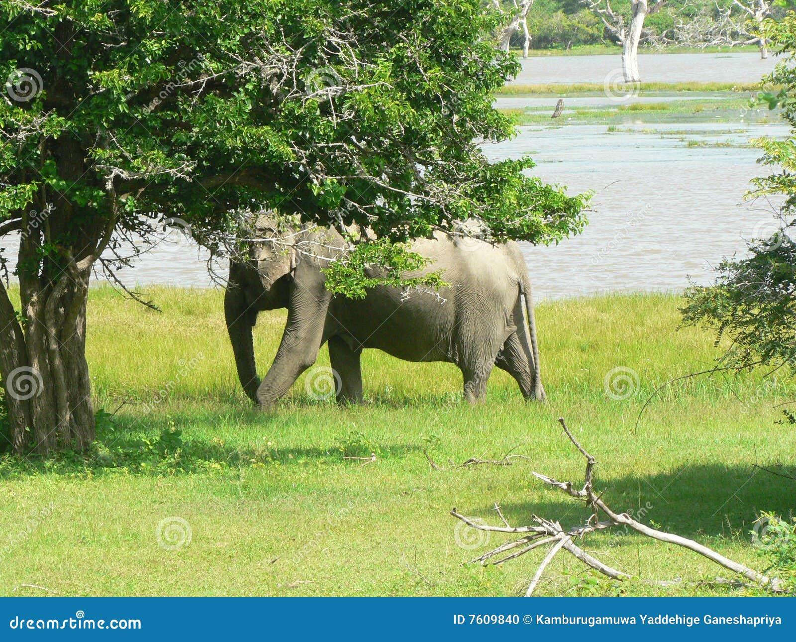 大象其自己teritory通配