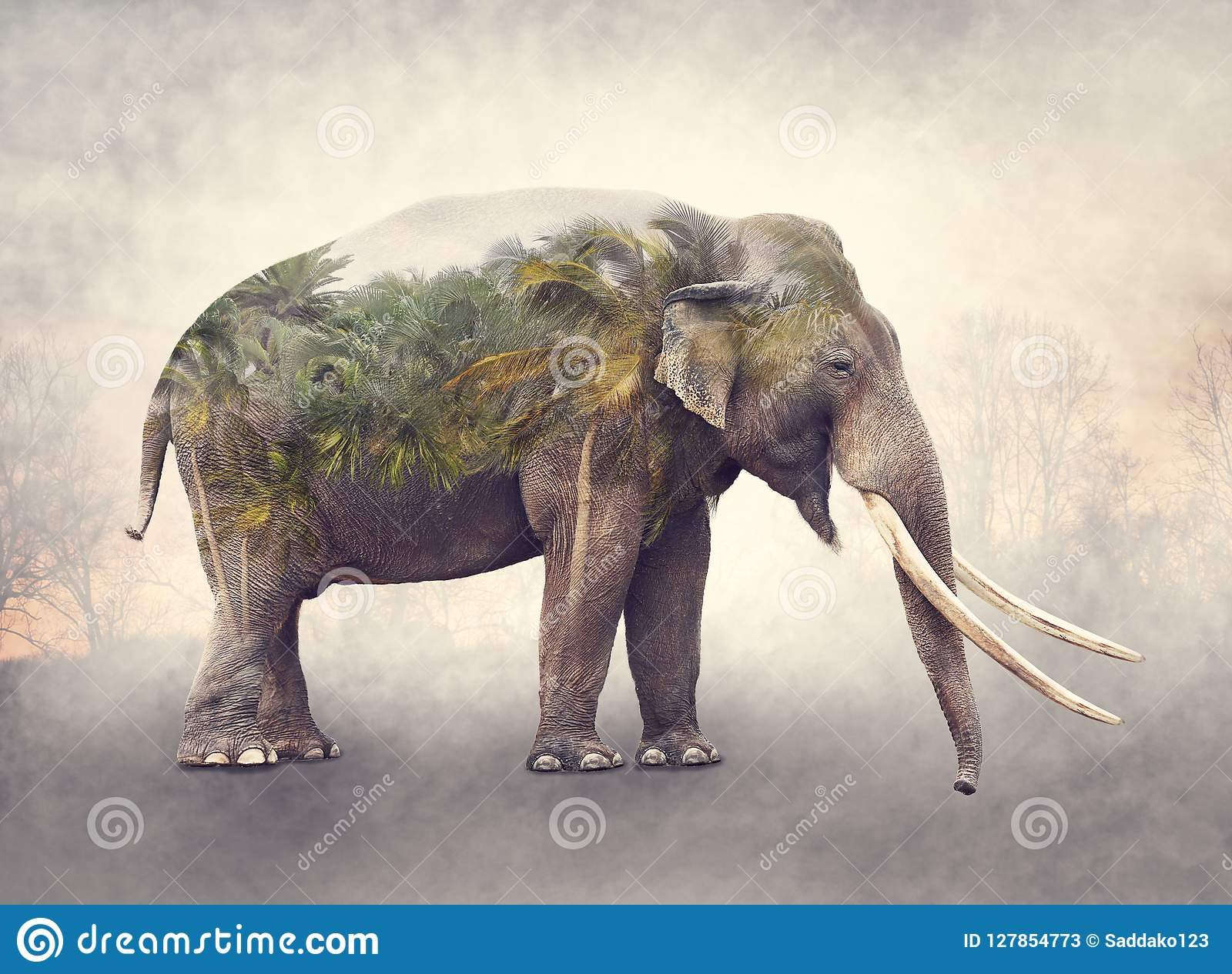 大象和棕榈树两次曝光