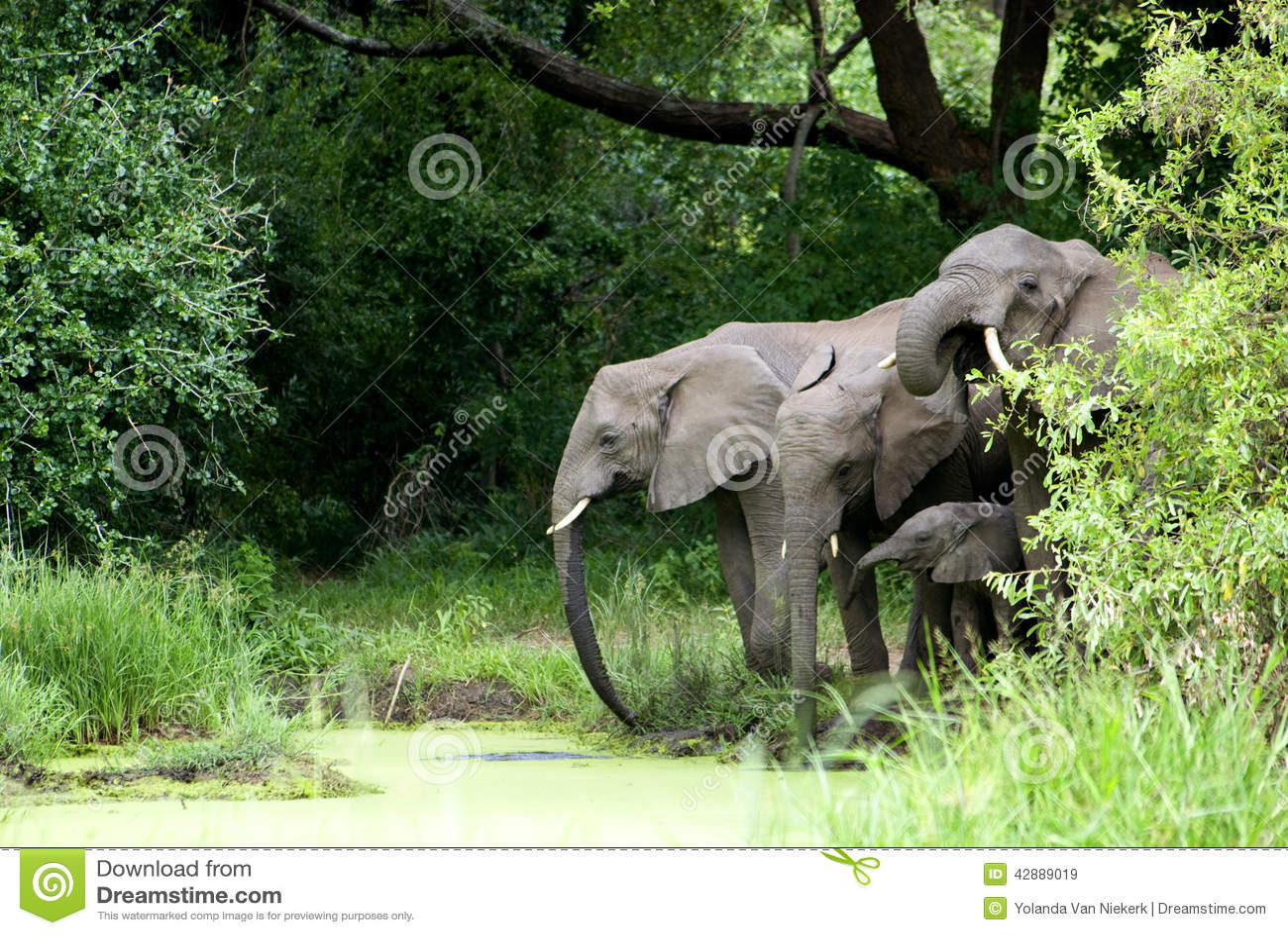 大象家庭饮用水