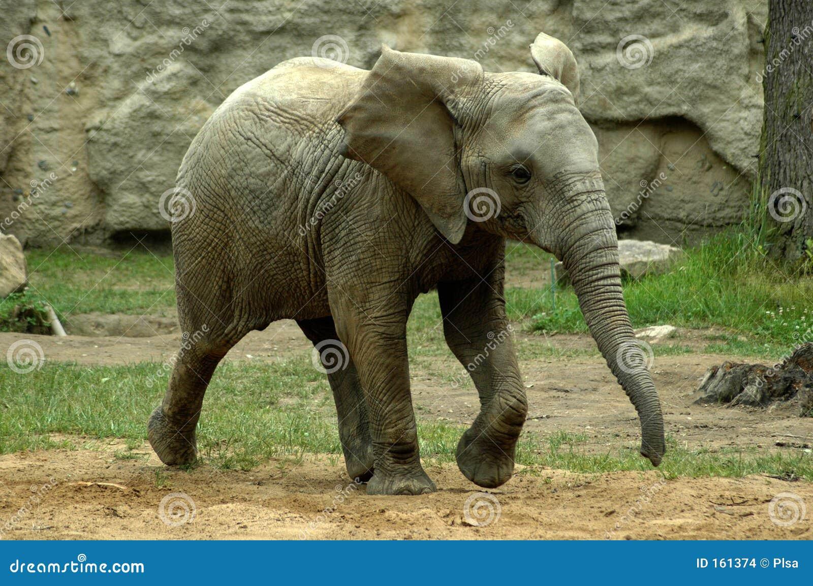 大象年轻人