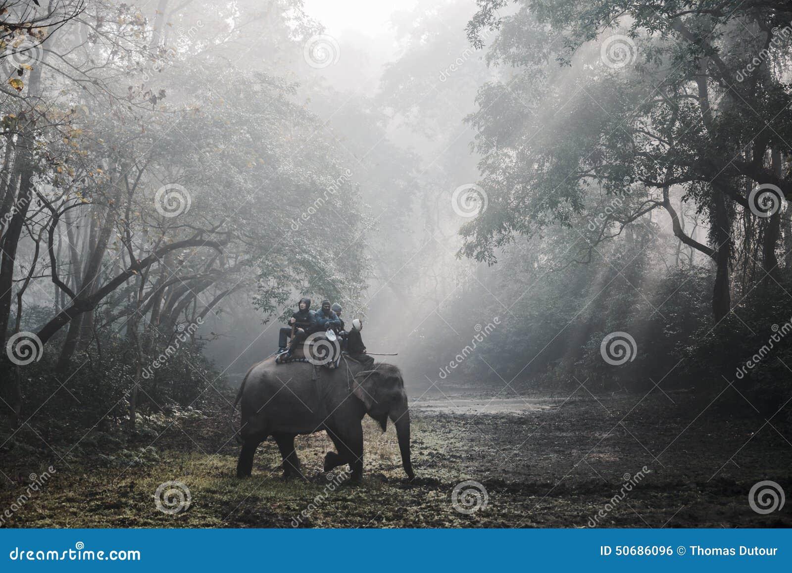 大象徒步旅行队在Chitwan,尼泊尔