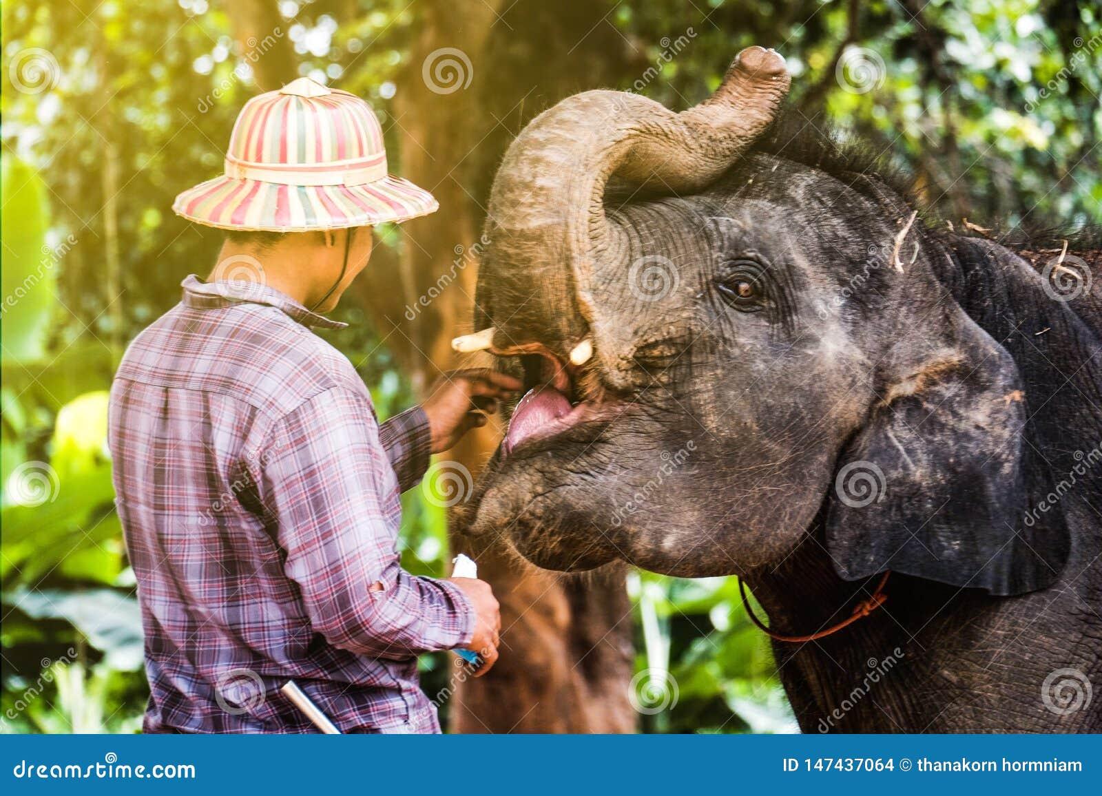 大象村庄在泰国