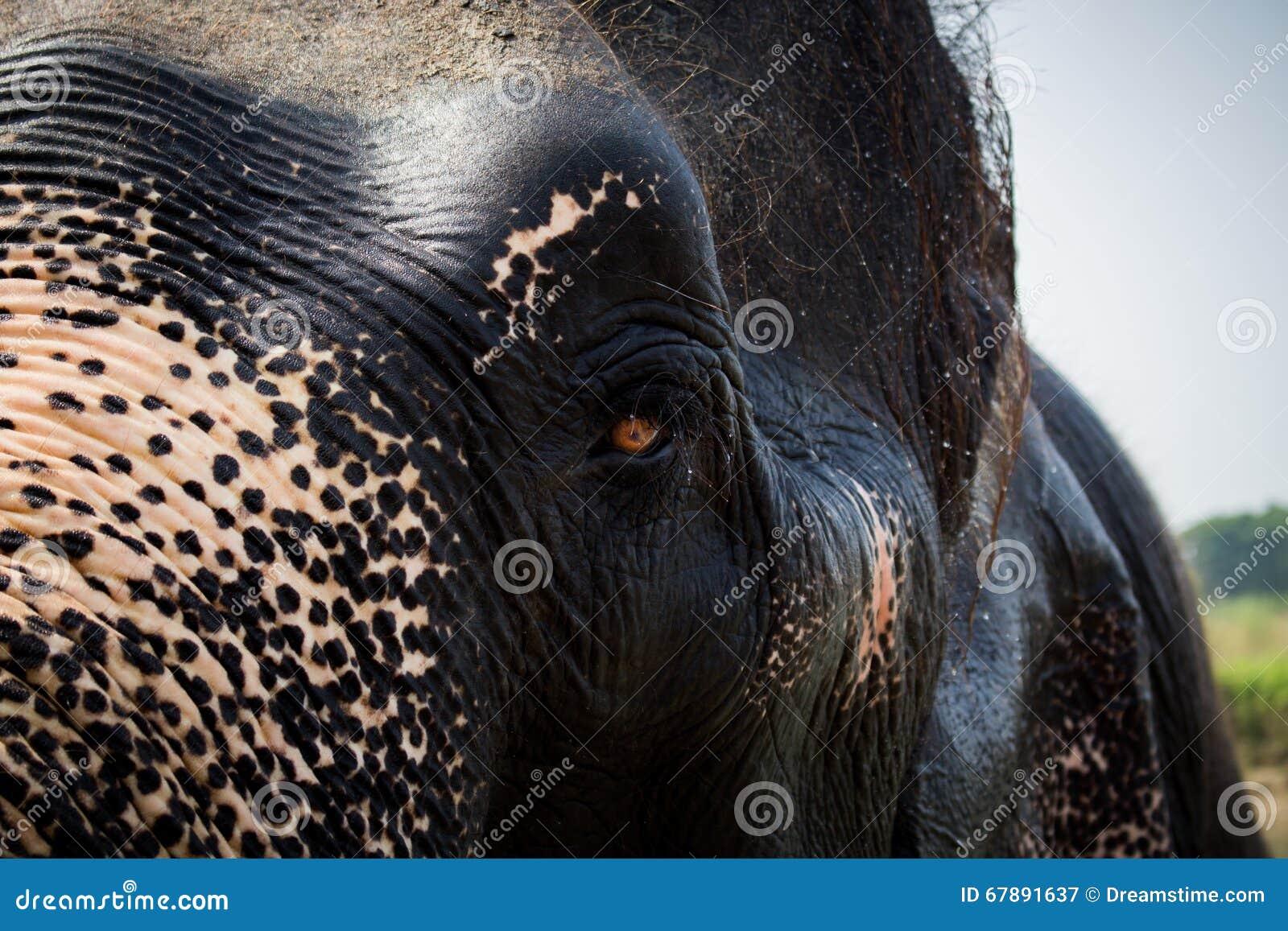 大象的半面孔