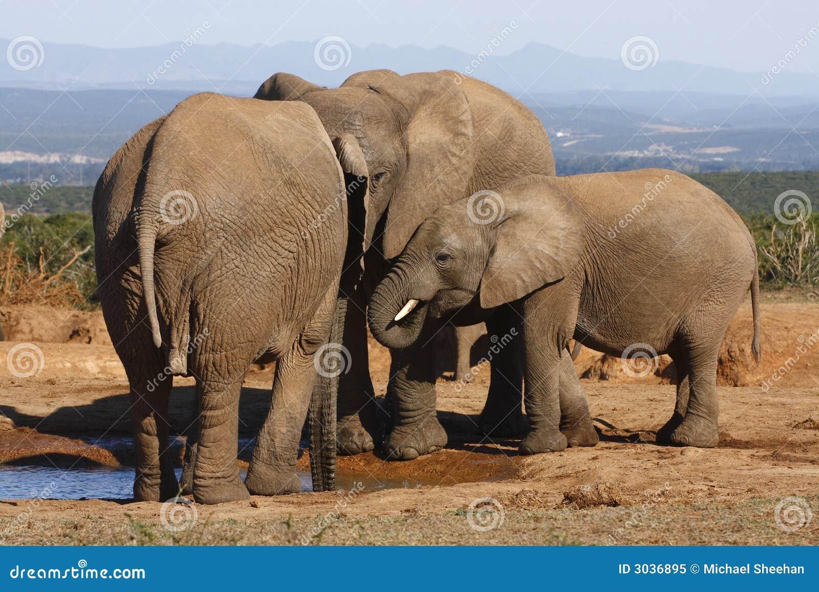 大象系列收集