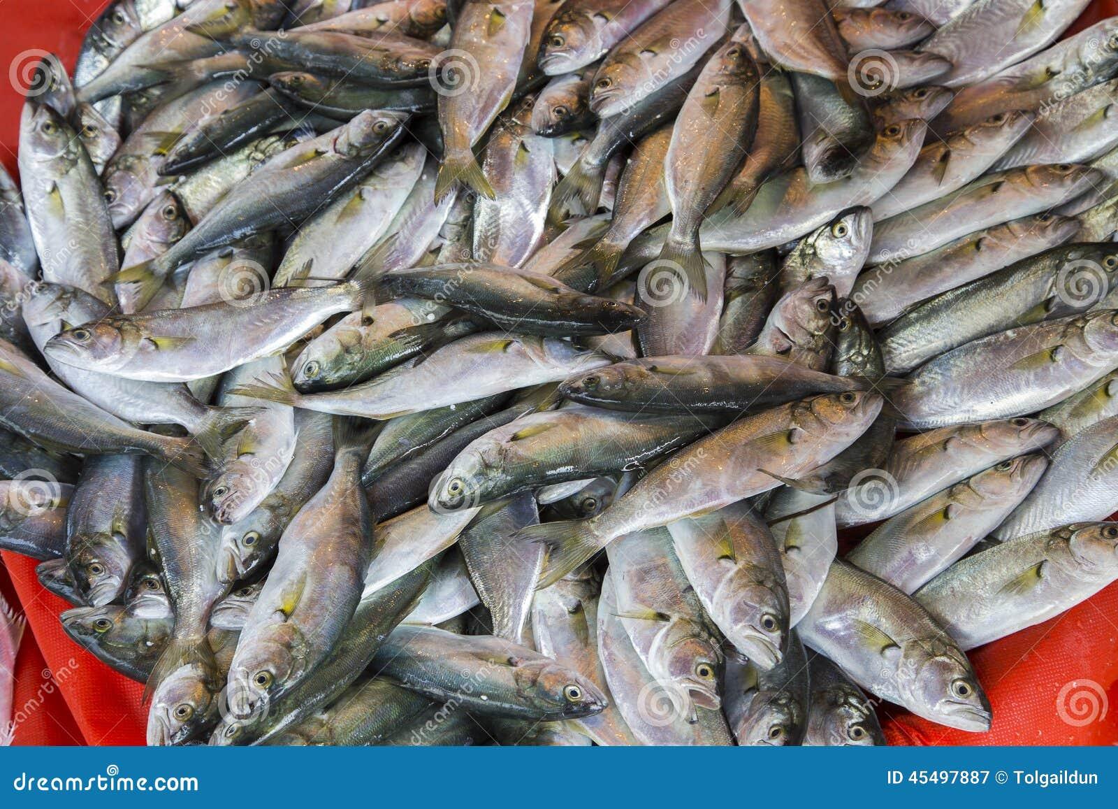 大量鲜鱼在市场上