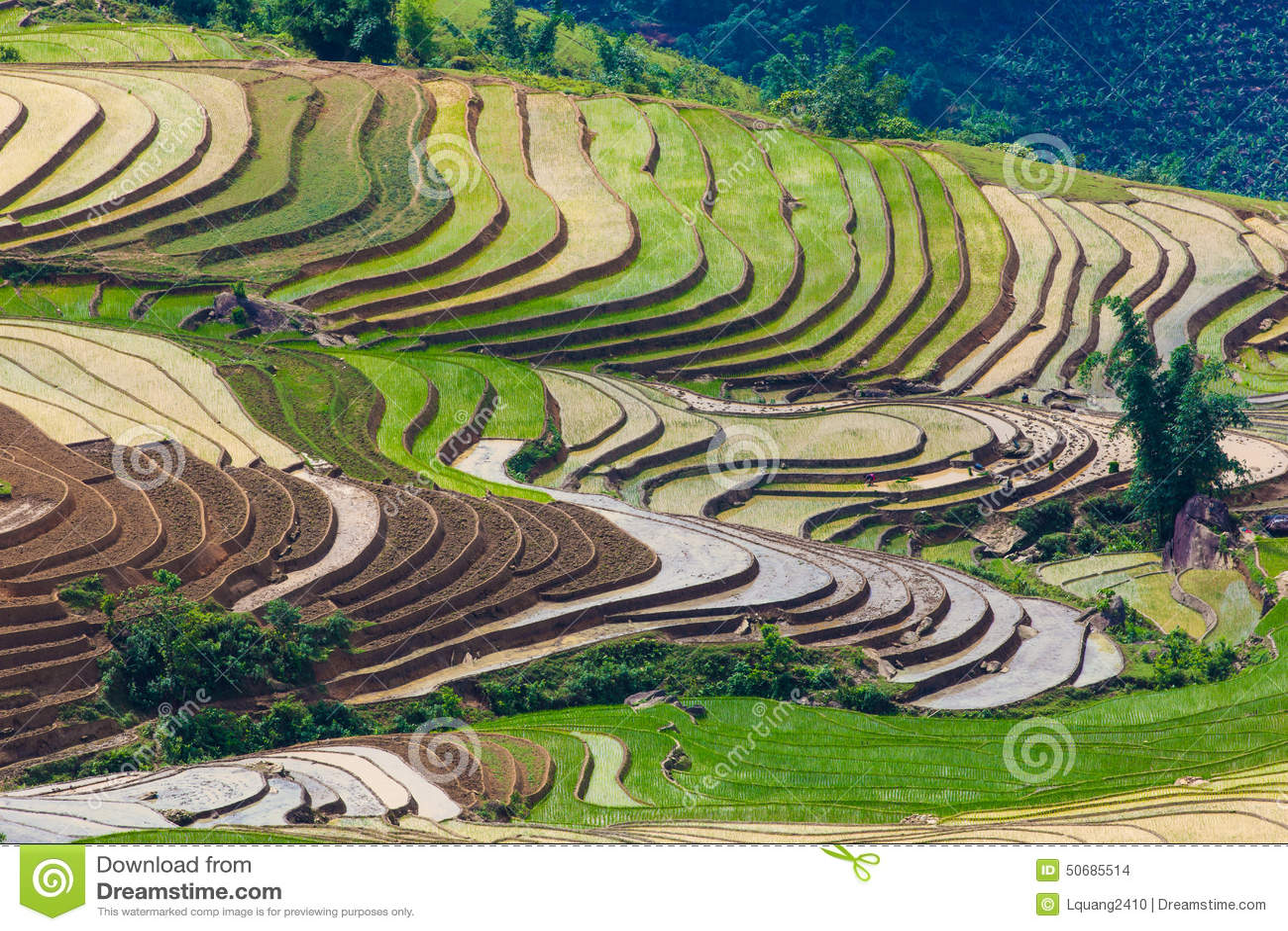 Download 大阳台米在Sapa -越南 库存照片. 图片 包括有 室外, 本质, 地点, 摄影, 通知, 横向, 越南 - 50685514