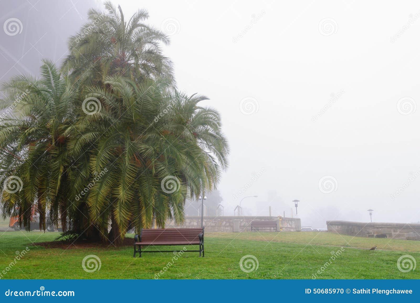 Download 大雾在悉尼港口的早晨 库存照片. 图片 包括有 都市风景, 有雾, 边路, 河沿, 空白, 贿赂, 街市 - 50685970