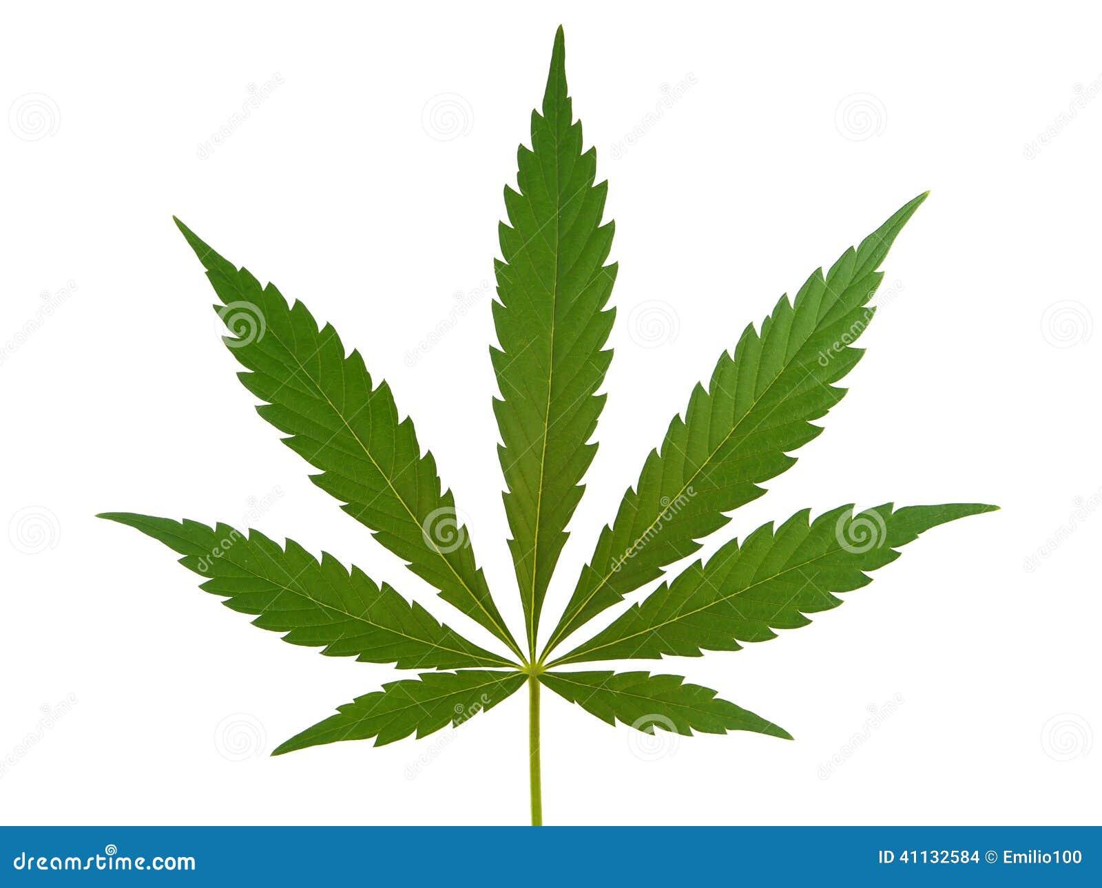 大麻叶子,大麻叶子