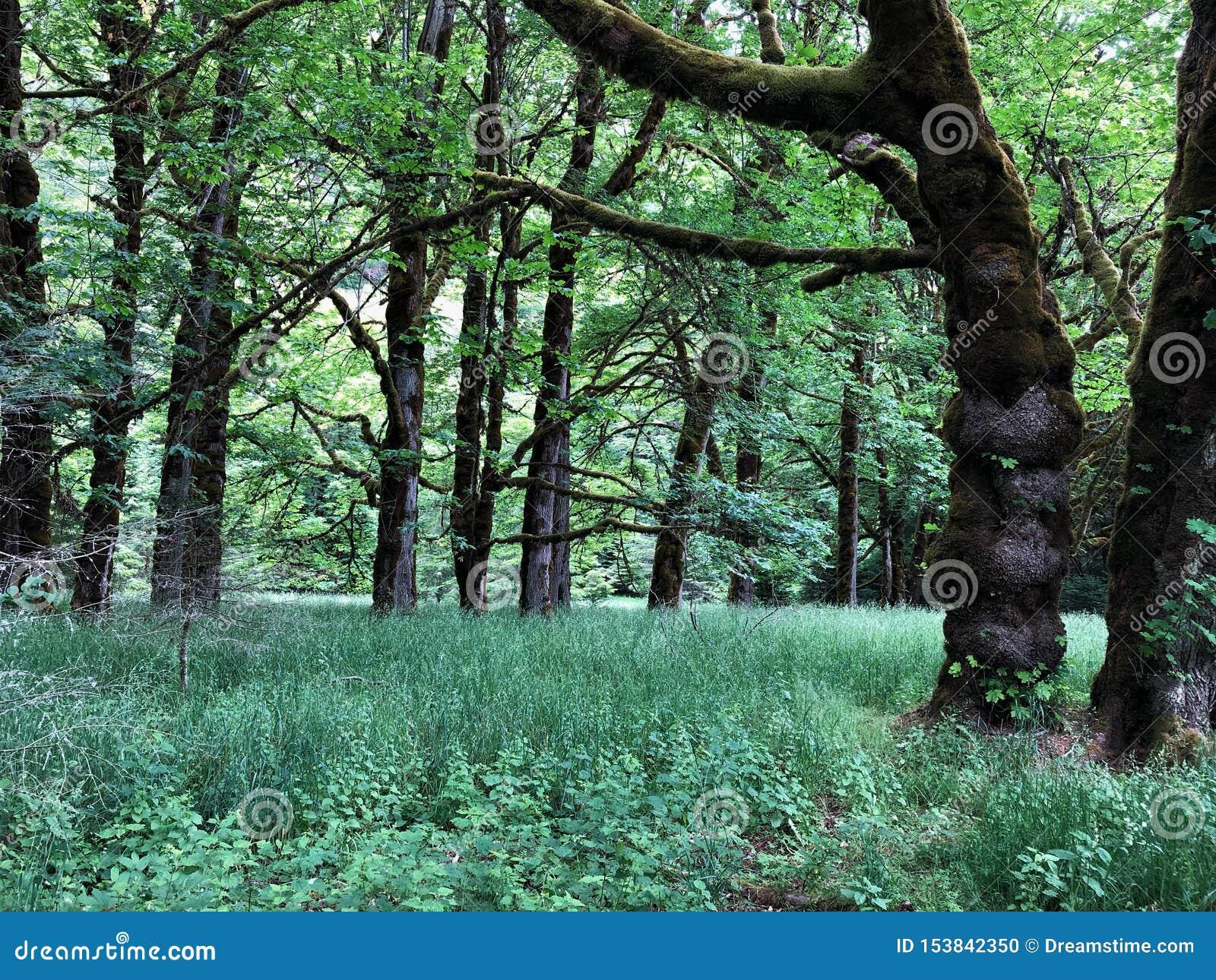 天在豪华的森林里