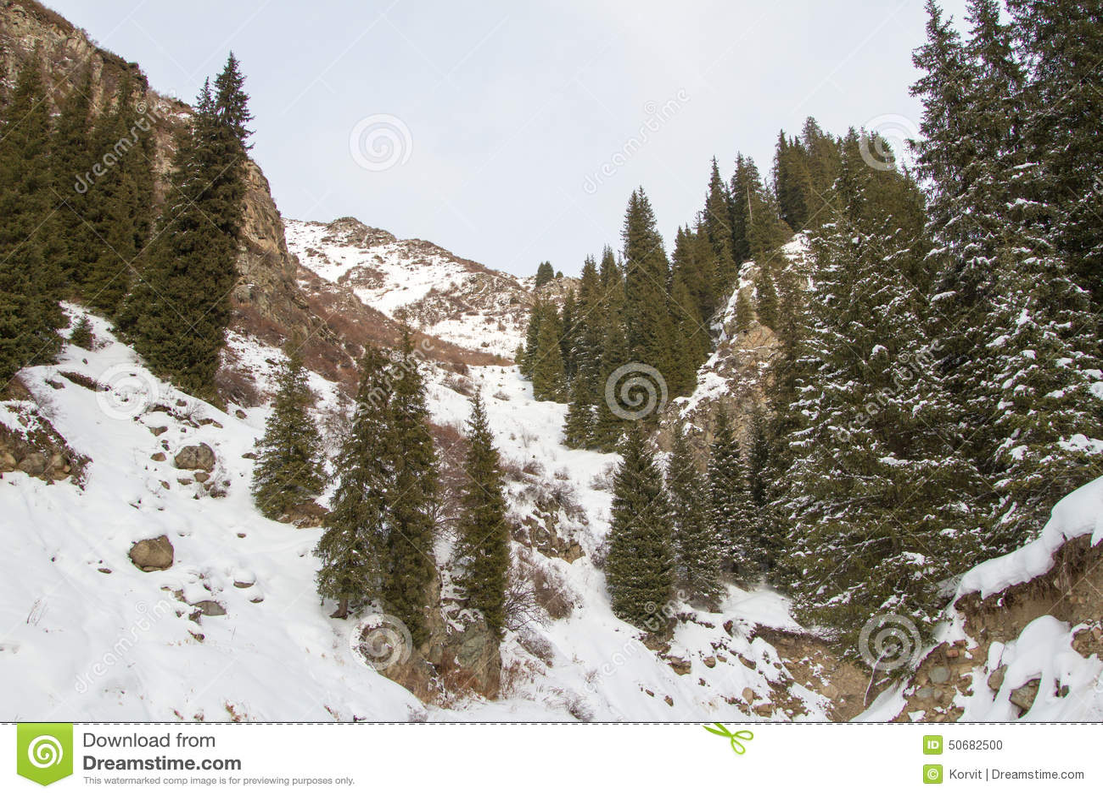 Download 天山冷杉 库存照片. 图片 包括有 横向, 云彩, 下雪, 场面, 阳光, 神仙, 冷杉, 具球果, 范围 - 50682500