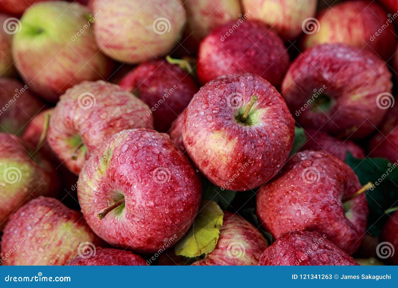 天生爱新鲜的成熟华盛顿苹果被洗涤的` s雨