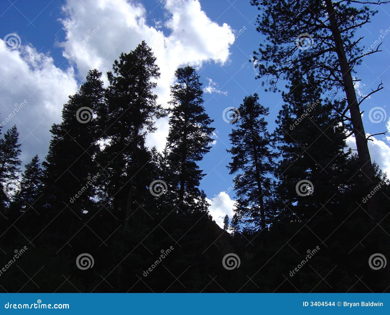 天空结构树