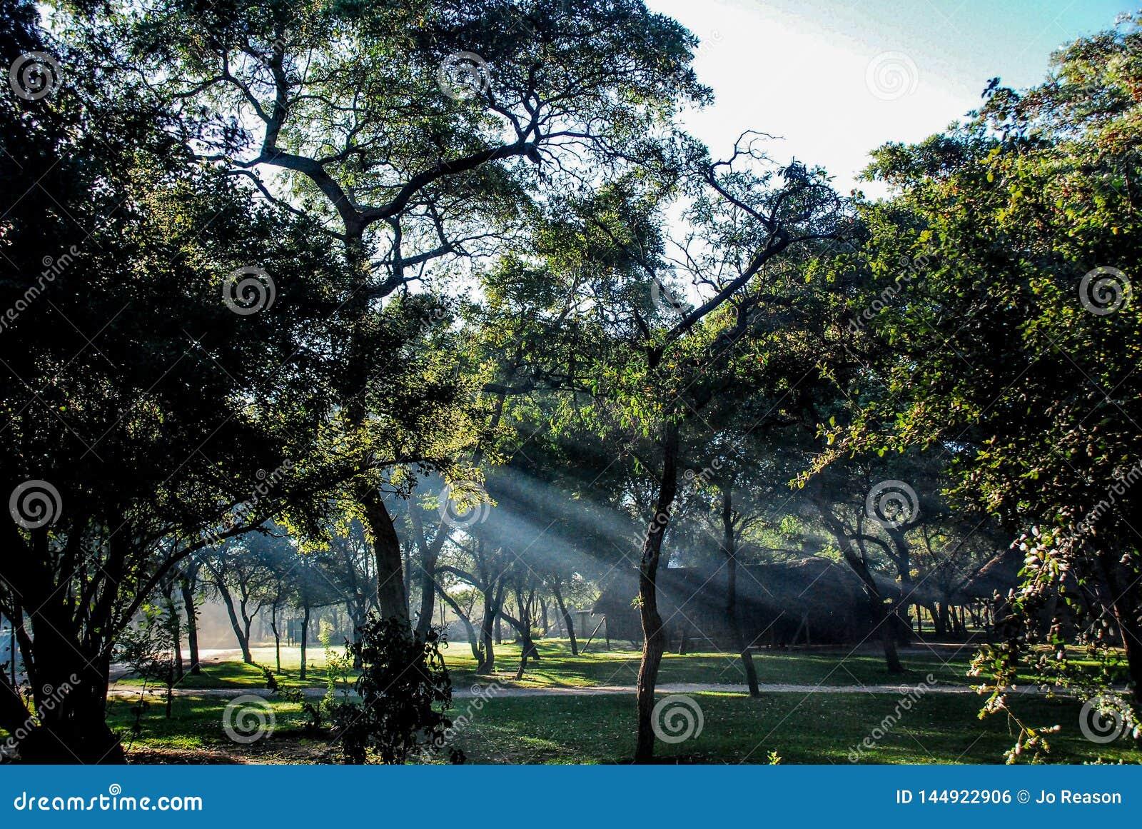太阳光芒通过在日出的树