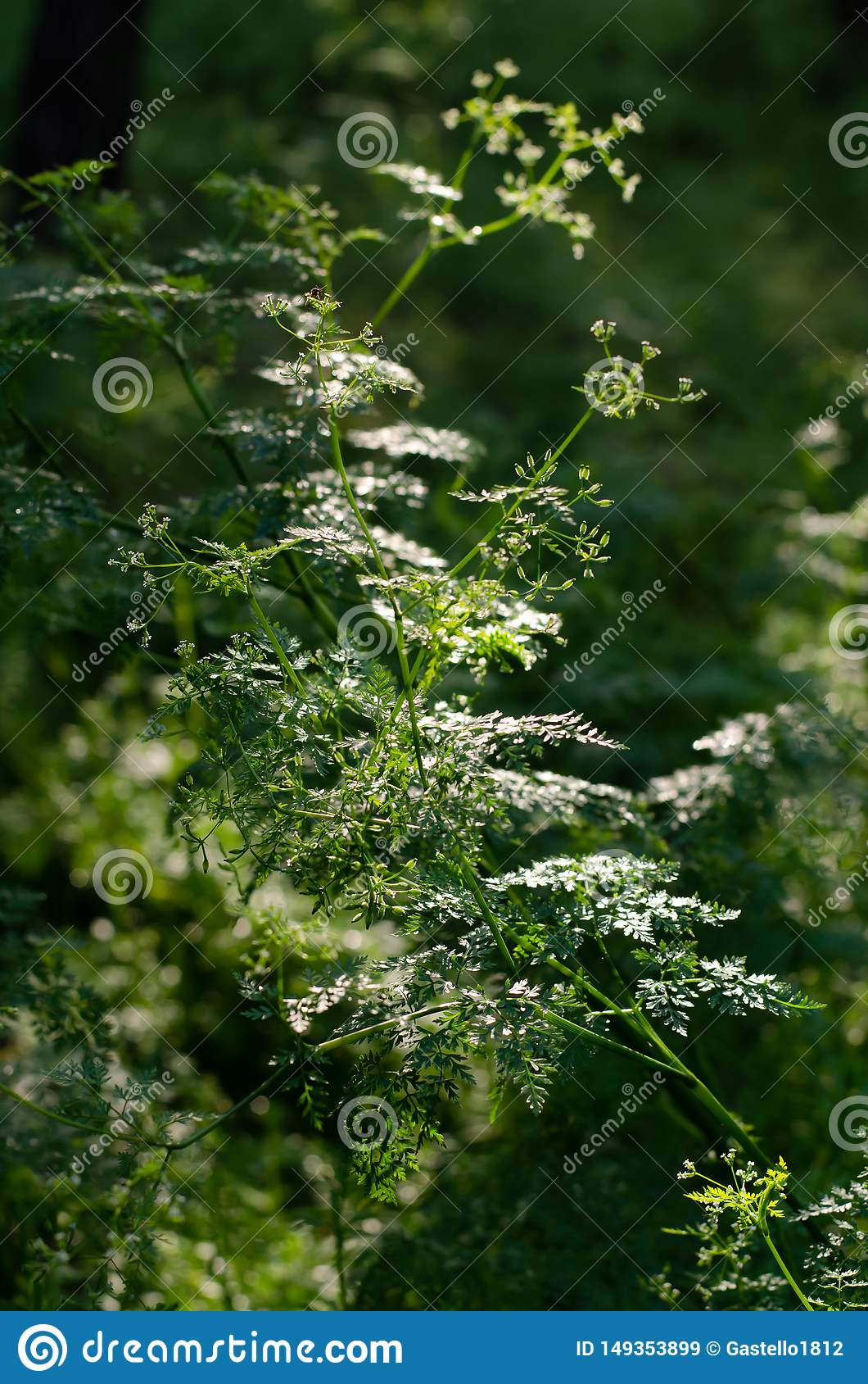 太阳光芒通过树冠照亮野草 ??
