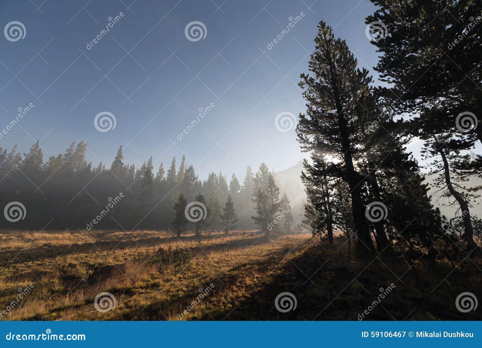 太阳放光穿过雾在山森林
