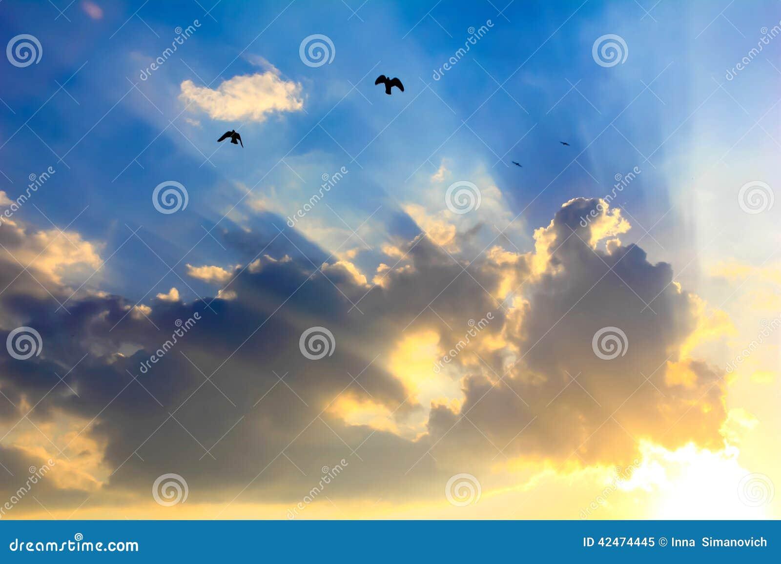 太阳的光芒通过云彩