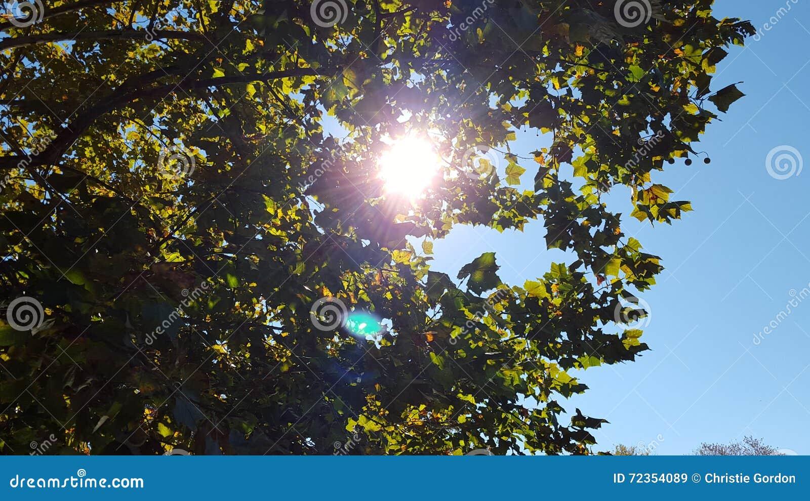 太阳通过树